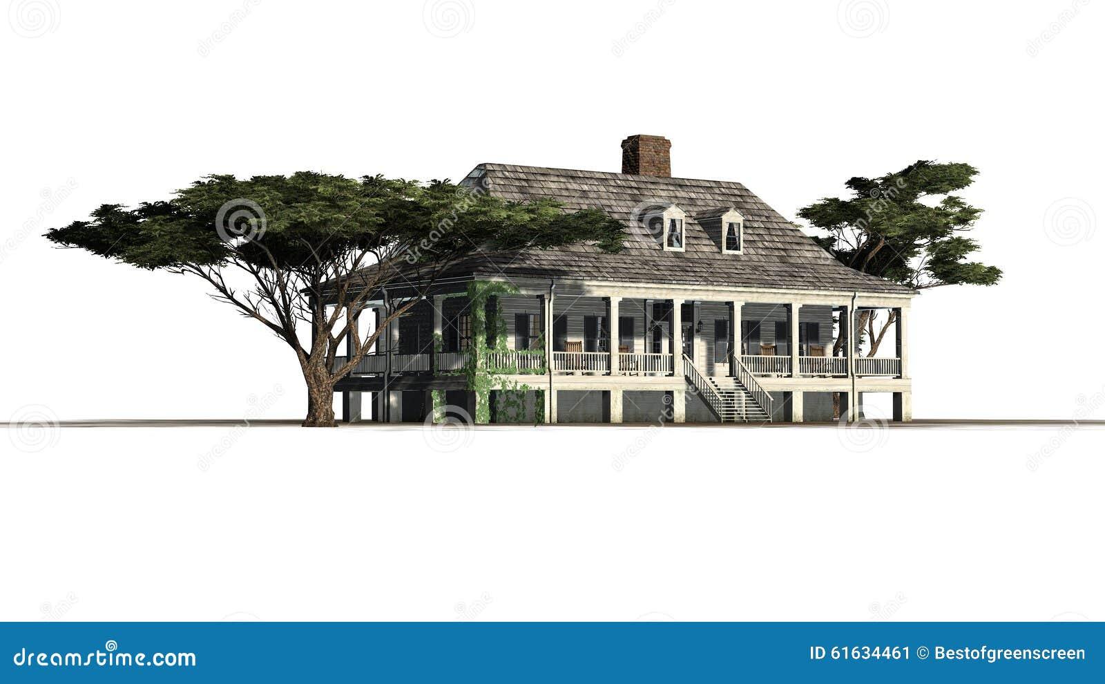 Chambre de plantation avec le pin de parapluie