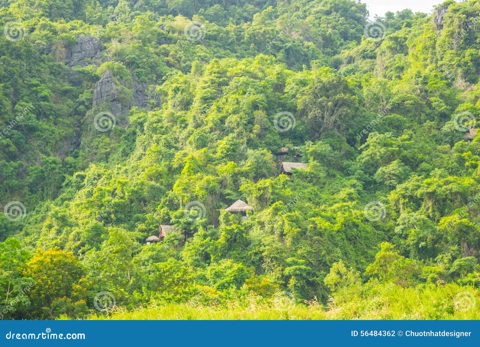 Chambre sur la forêt pour transporter des touristes à la caverne de Phong Nha, Phong Nha - le KE frappent le parc national, Viet
