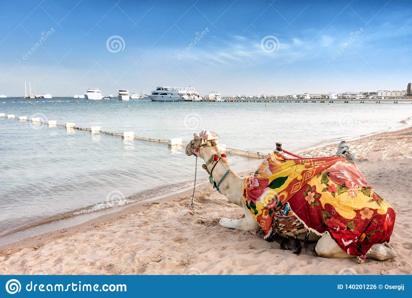 Chameau fier se reposant sur la plage égyptienne Dromedarius de Camelus