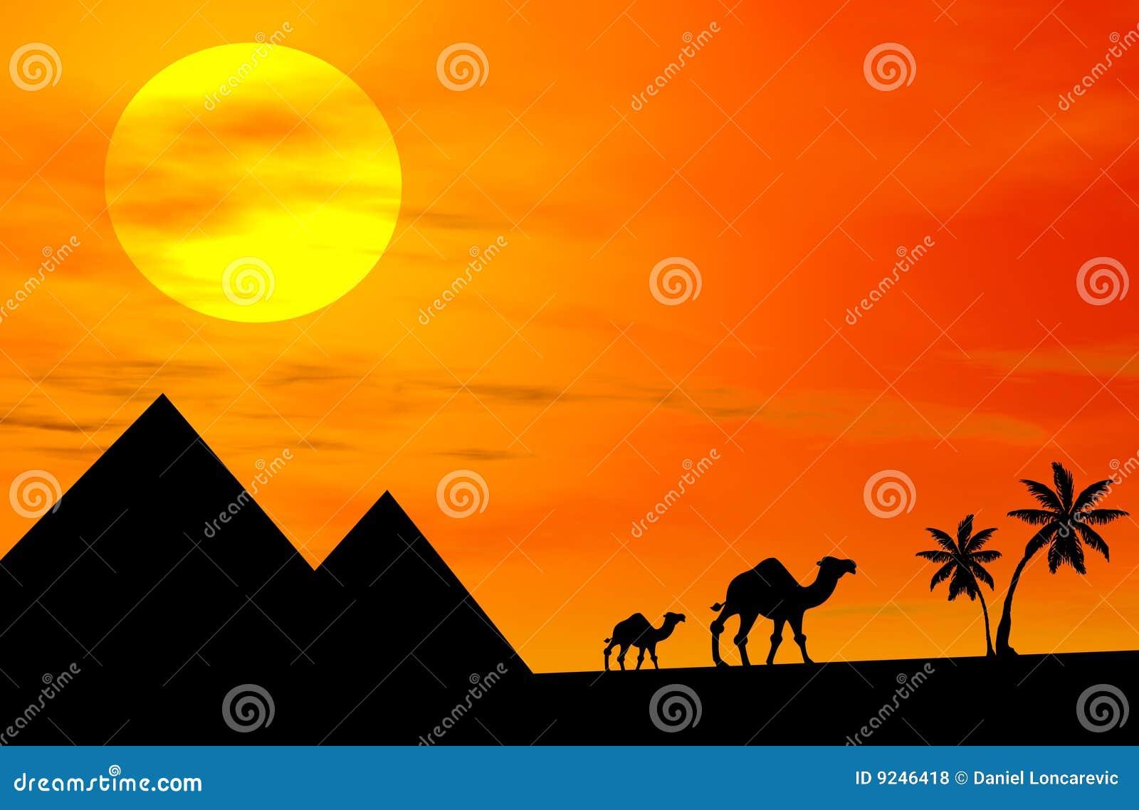 Chameaux au coucher du soleil