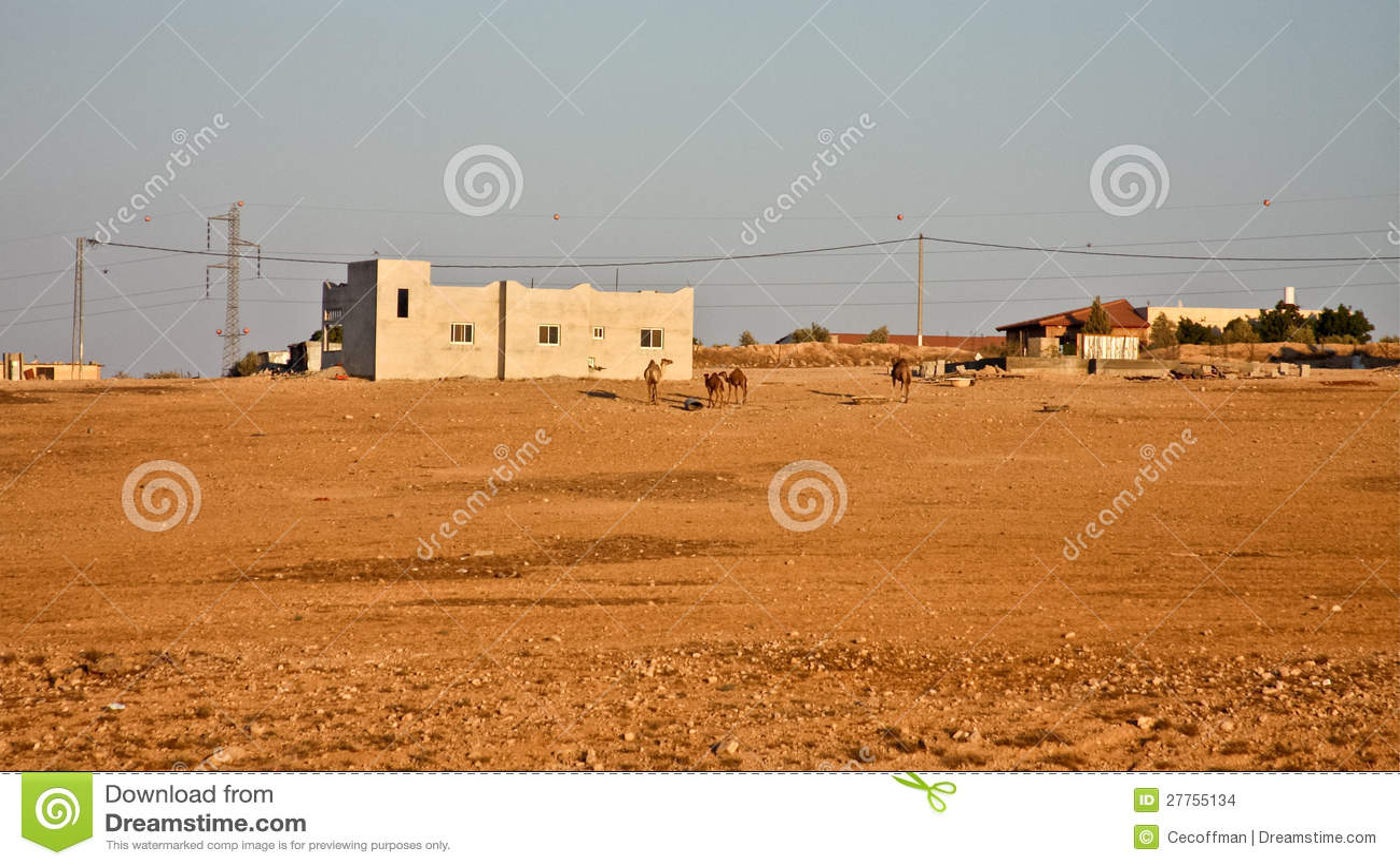 Chameaux en dehors de village arabe
