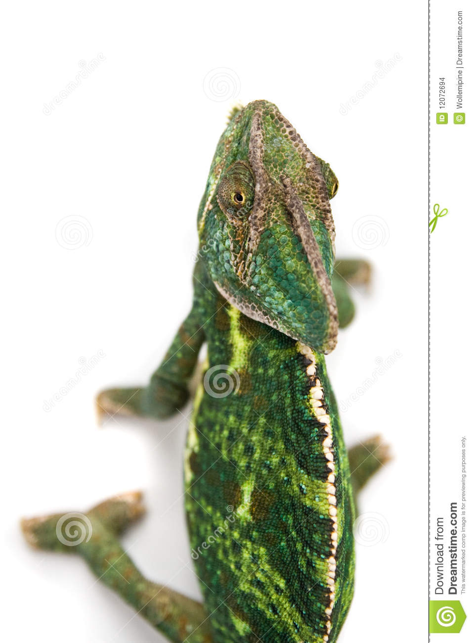 Chameleon Camouflage Isolated With Clipping Path Stock Images - Image ...
