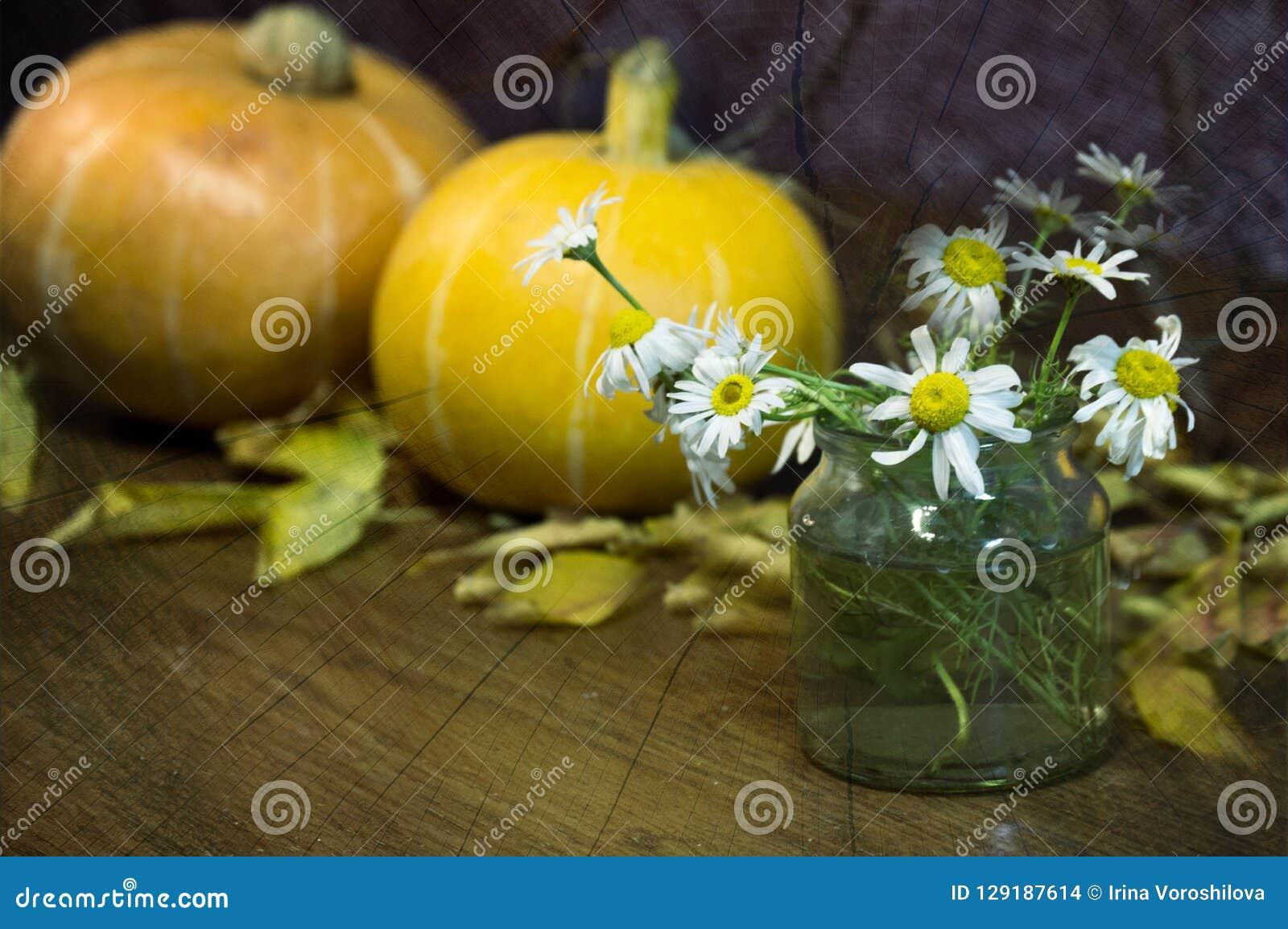 Chamomile και κολοκύθα στο φύλλωμα φθινοπώρου για αποκριές