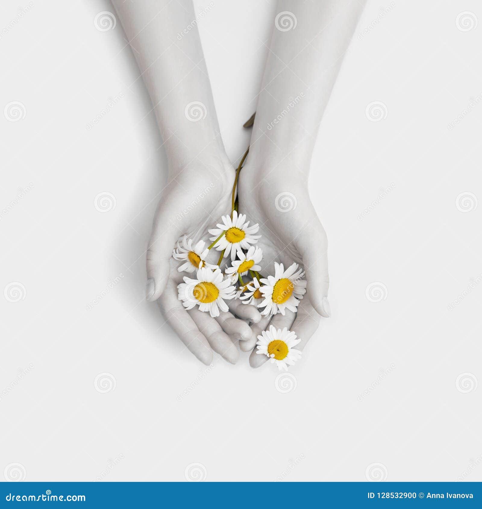 Chamomile φυσικές γυναίκες καλλυντικών τέχνης χεριών μόδας, άσπρο όμορφο chamomile χέρι λουλουδιών με τη φωτεινή αντίθεση makeup,