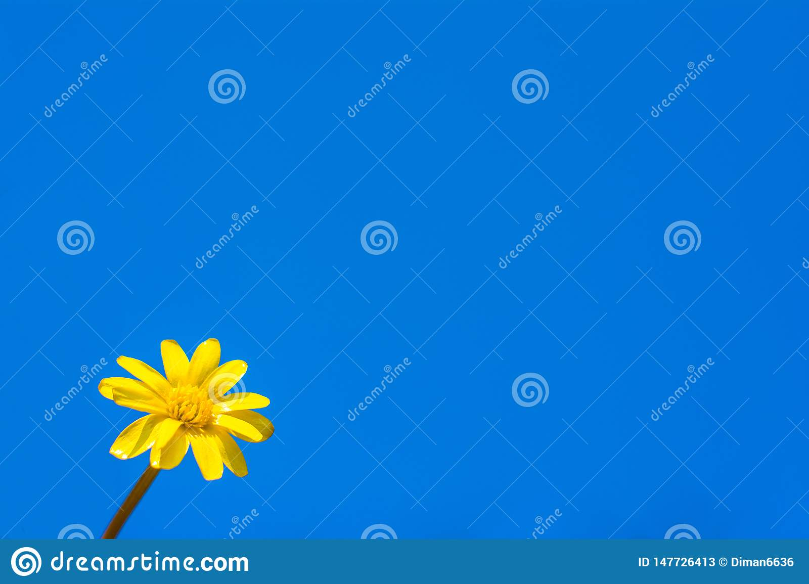 Chamomile on the background of the sky. Copyspace