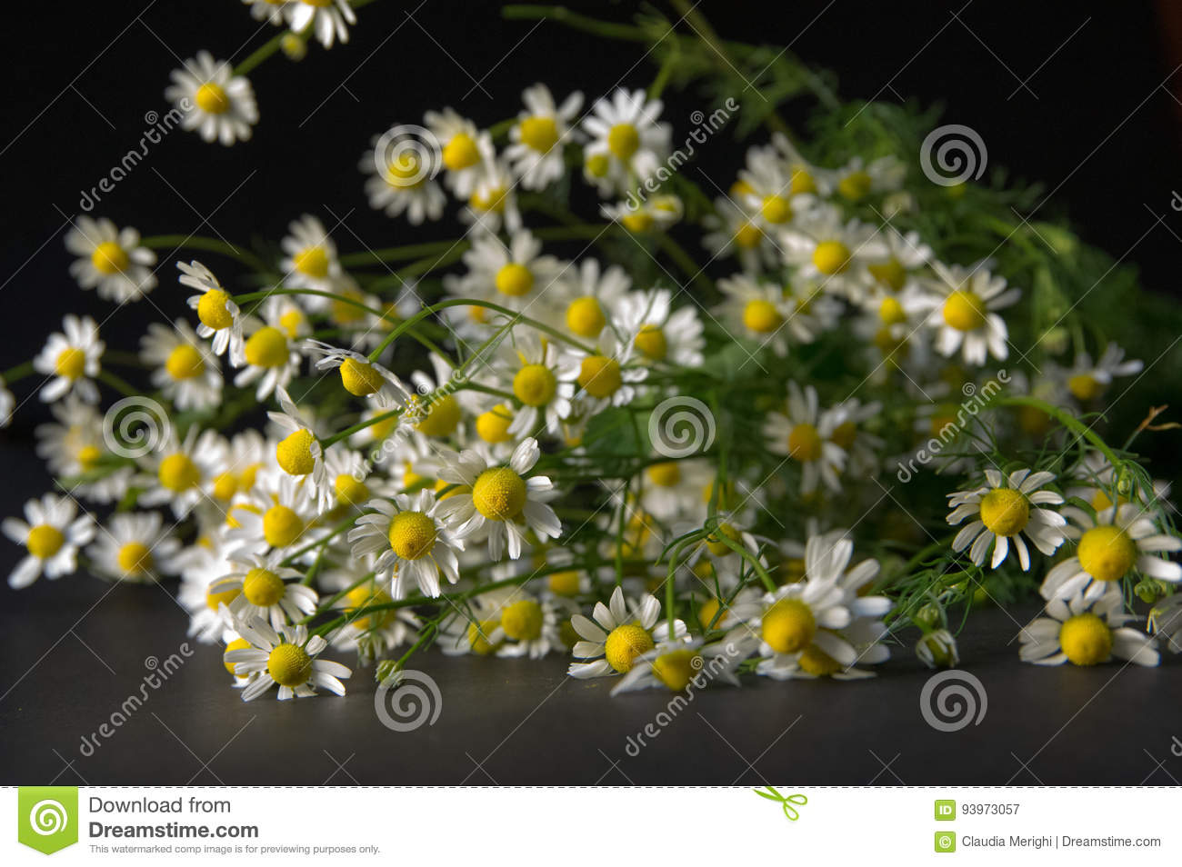 Chamomile or camomile stock image image of herbal infusions 93973057 chamomile is the common name for several daisy like plants of the family asteraceae that are commonly used to make herb infusions to serve various medicinal izmirmasajfo