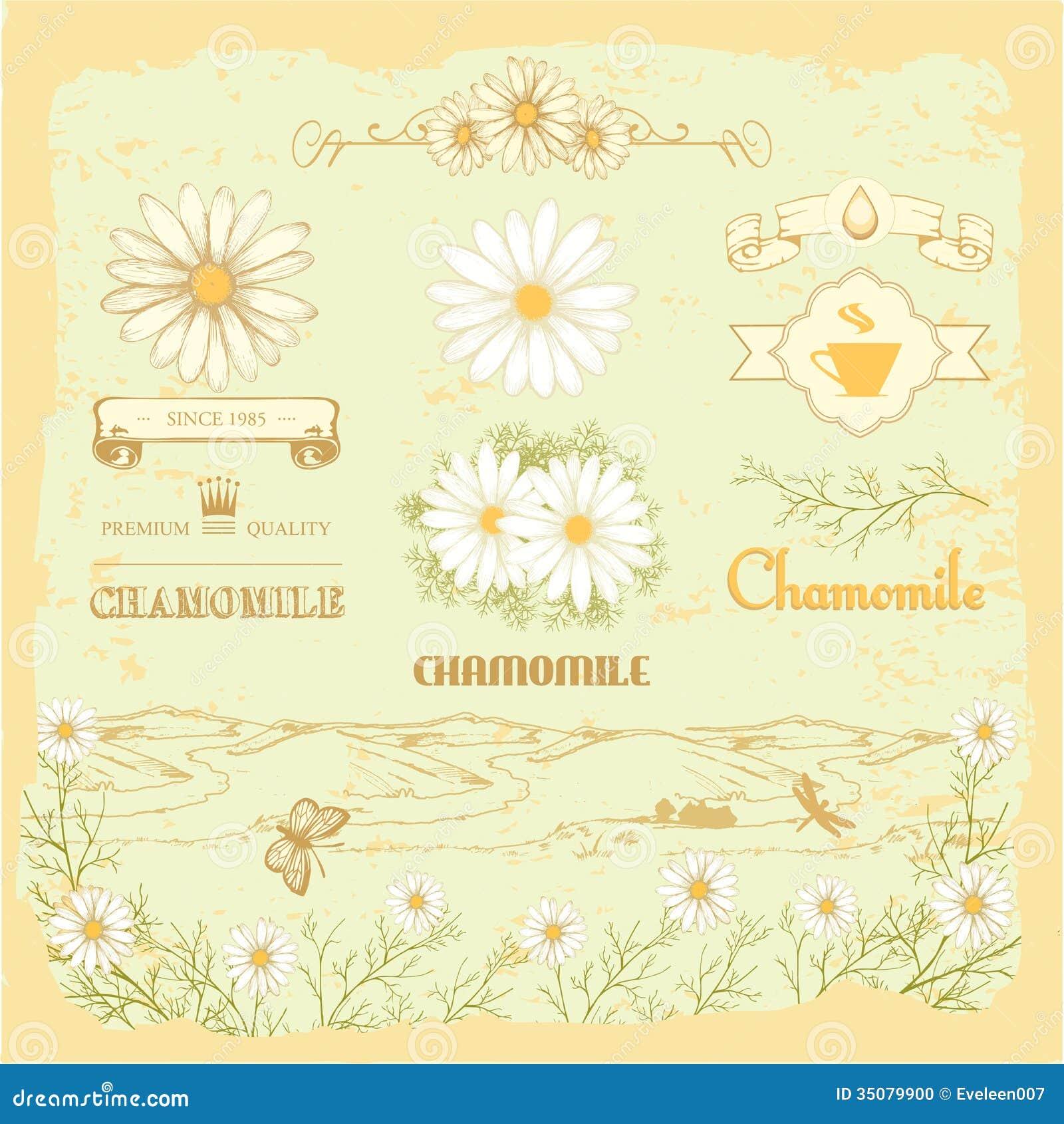 Vintage Flower Diagram Schematic Diagrams Botanical Tree Ring Vintageprintable Chamomile Stock Vector Illustration Of Morphology 35079900 Light