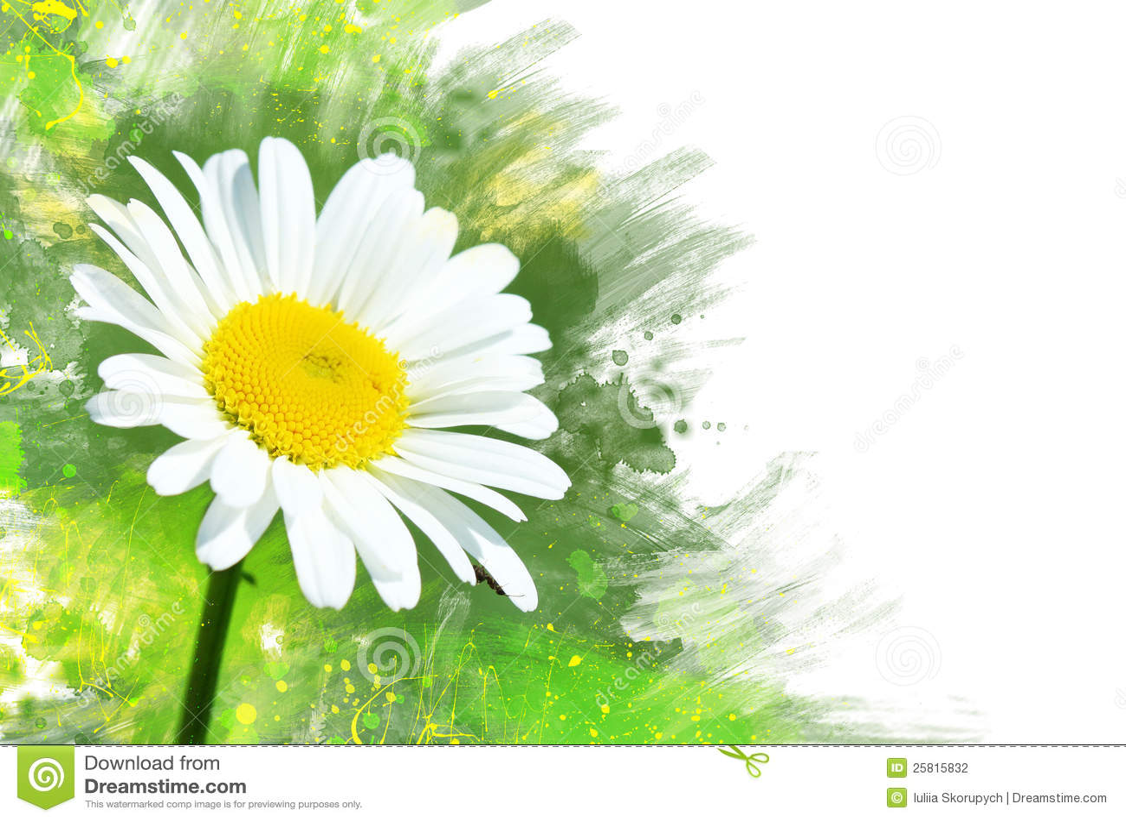 Watercolor Single Flower Chamomile