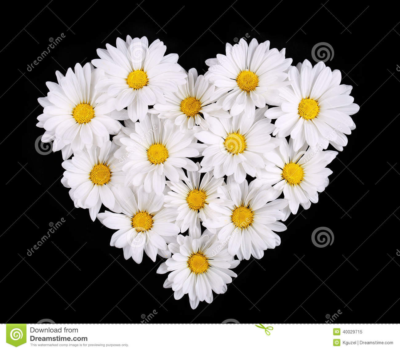 Chamomile Flowers In Heart Shape Black Background Daisy Stock Ima
