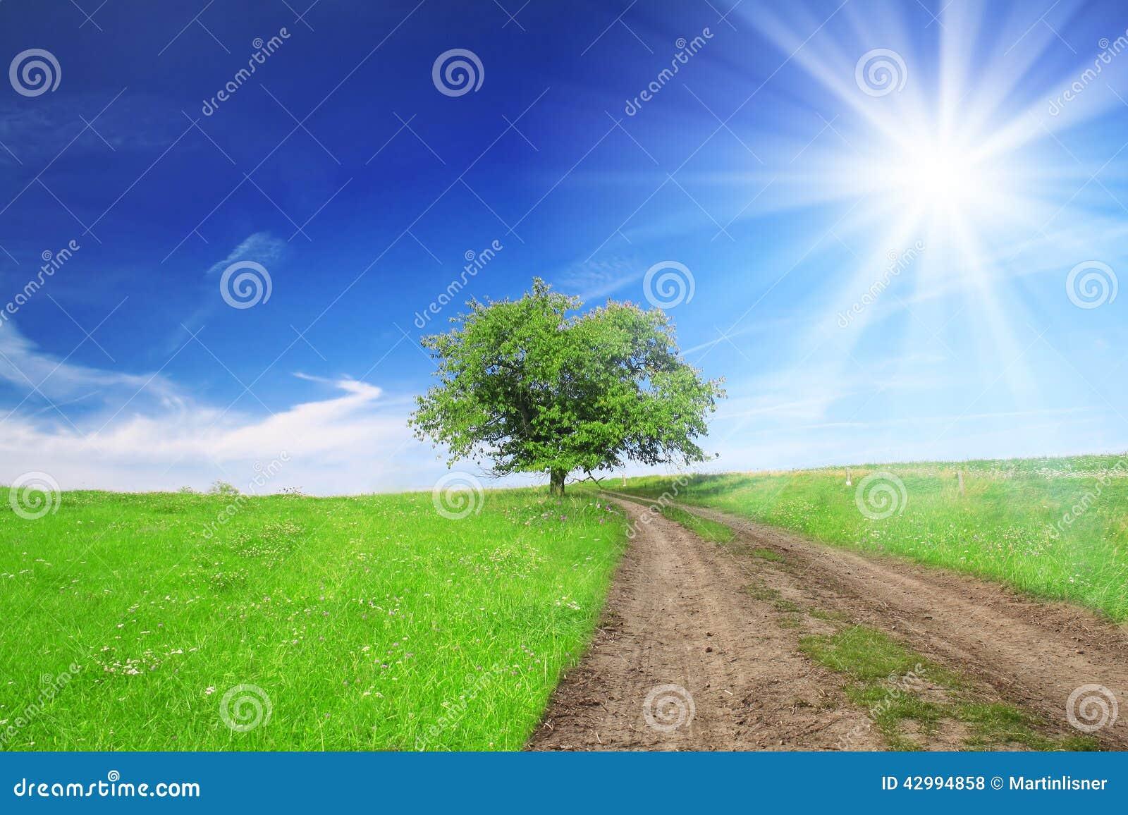 champ arbre ciel bleu avec le soleil - Arbre Ciel