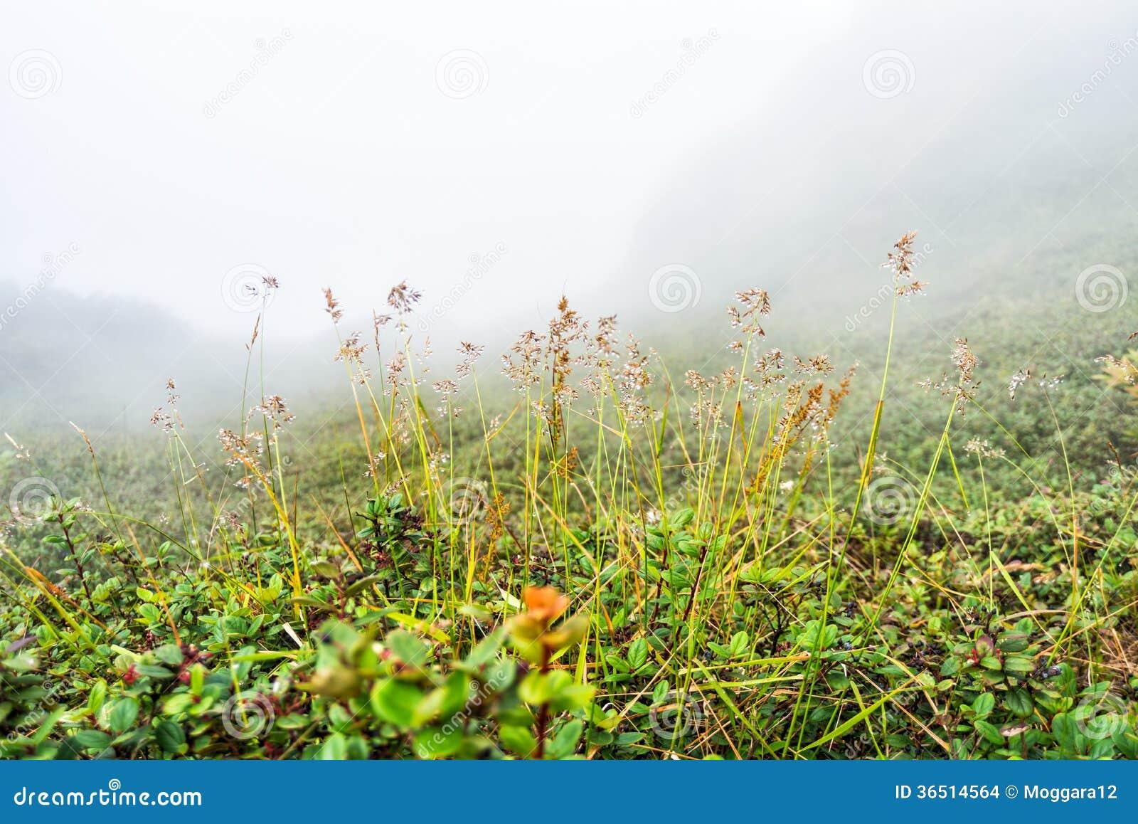 Champ avec brumeux sur la montagne