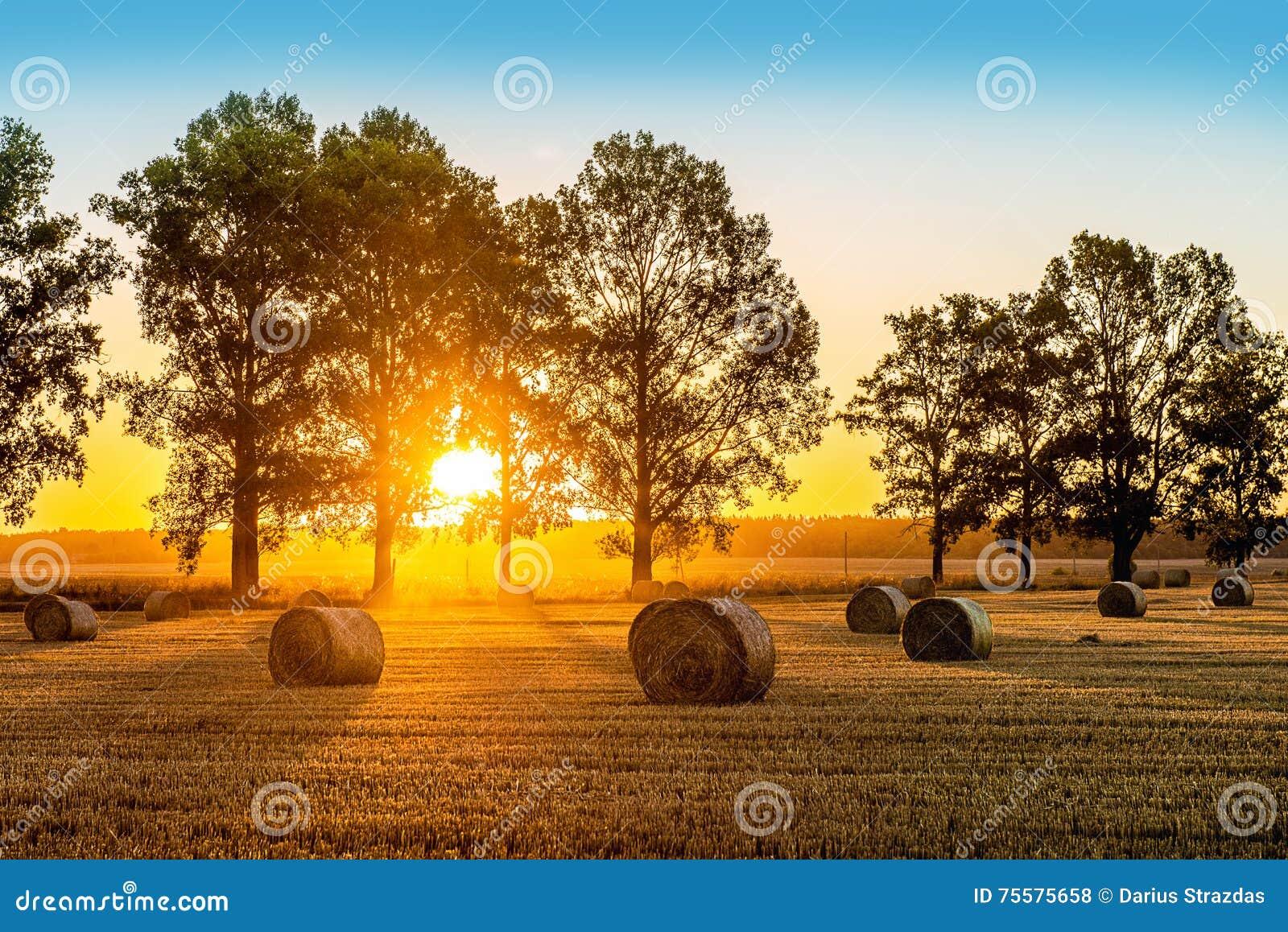 Champ d été de lever de soleil