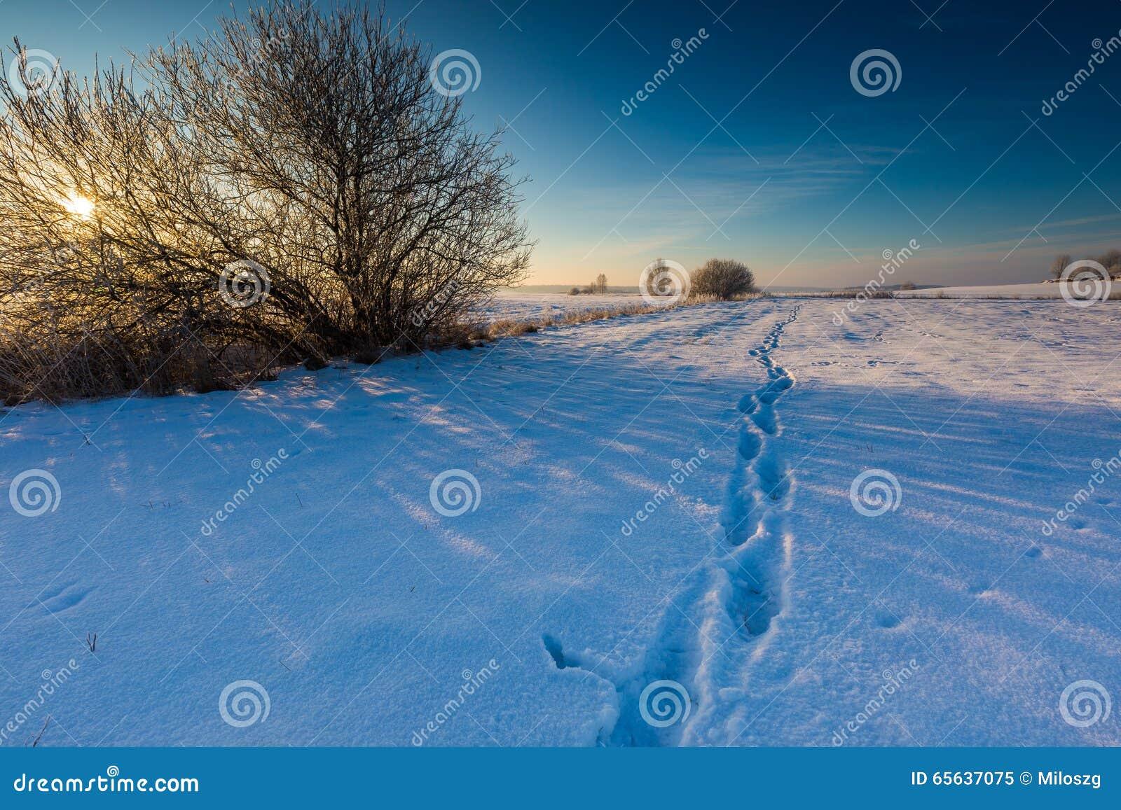 Champ d hiver avec l arbre défraîchi