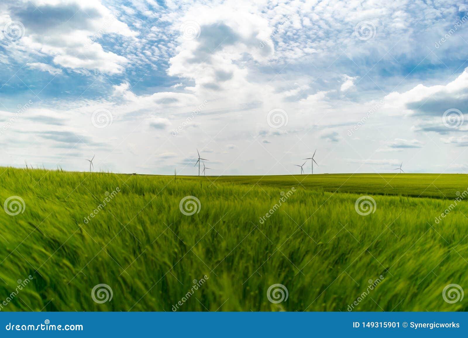 Champ de bl? vert avec des turbines de vent en papier peint de fond