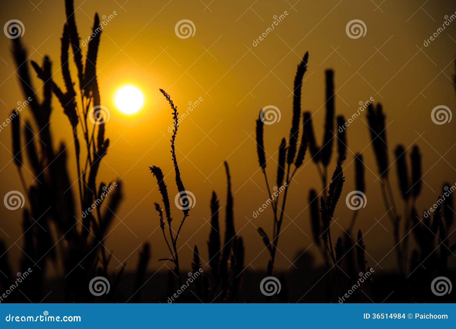 Champ de coucher du soleil
