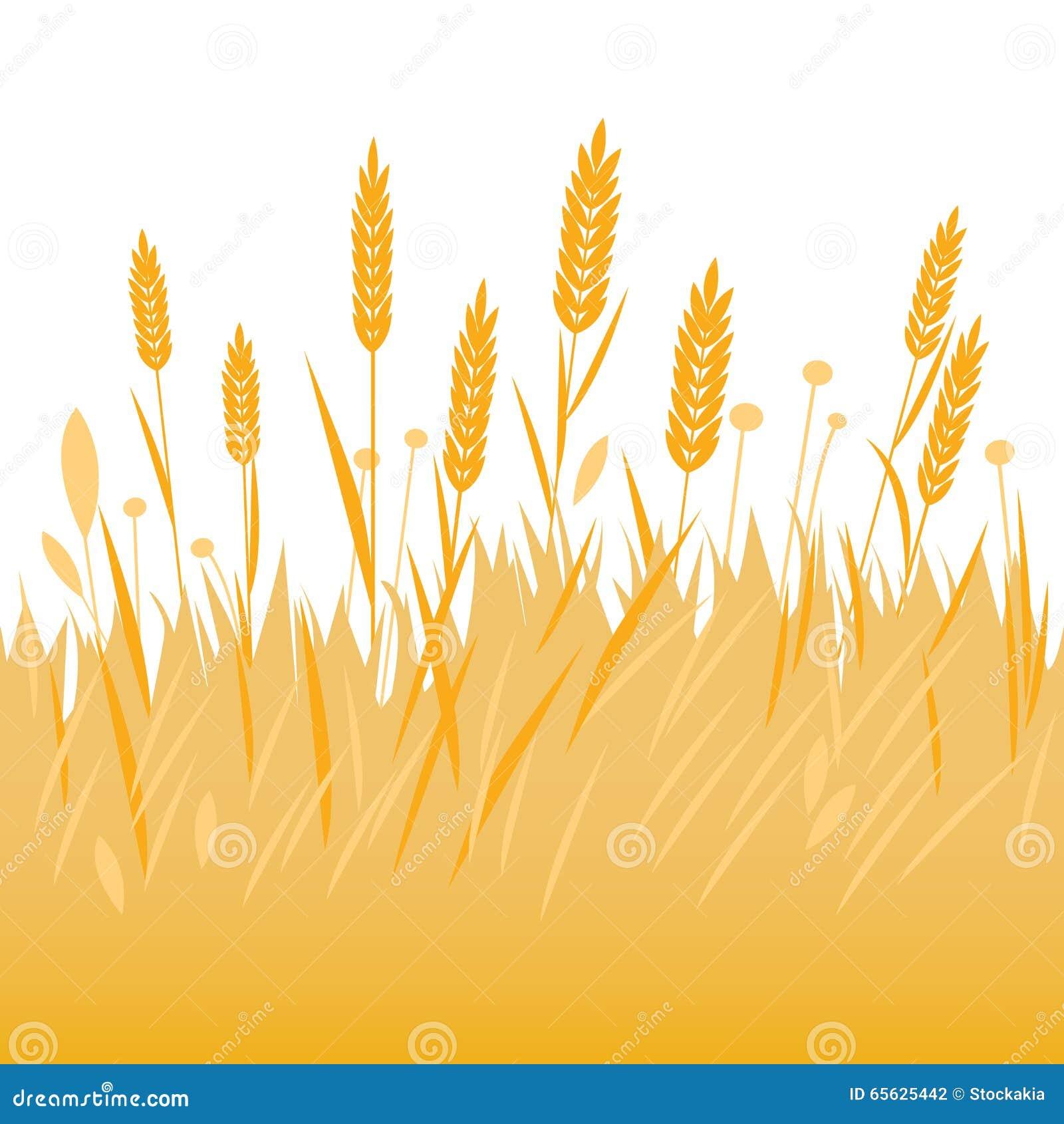 Champ de fond de blé, d orge ou de seigle