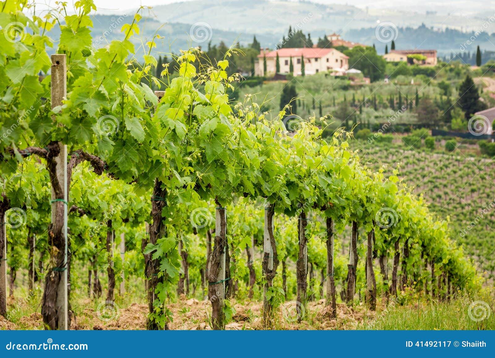 Champ De Vigne champ des vignes sur un fond d'une hacienda en toscane image stock