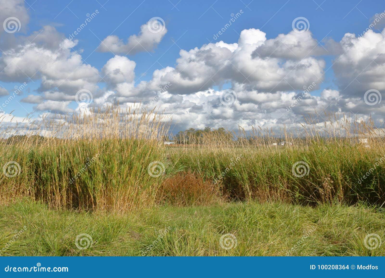Champ et cumulus herbeux
