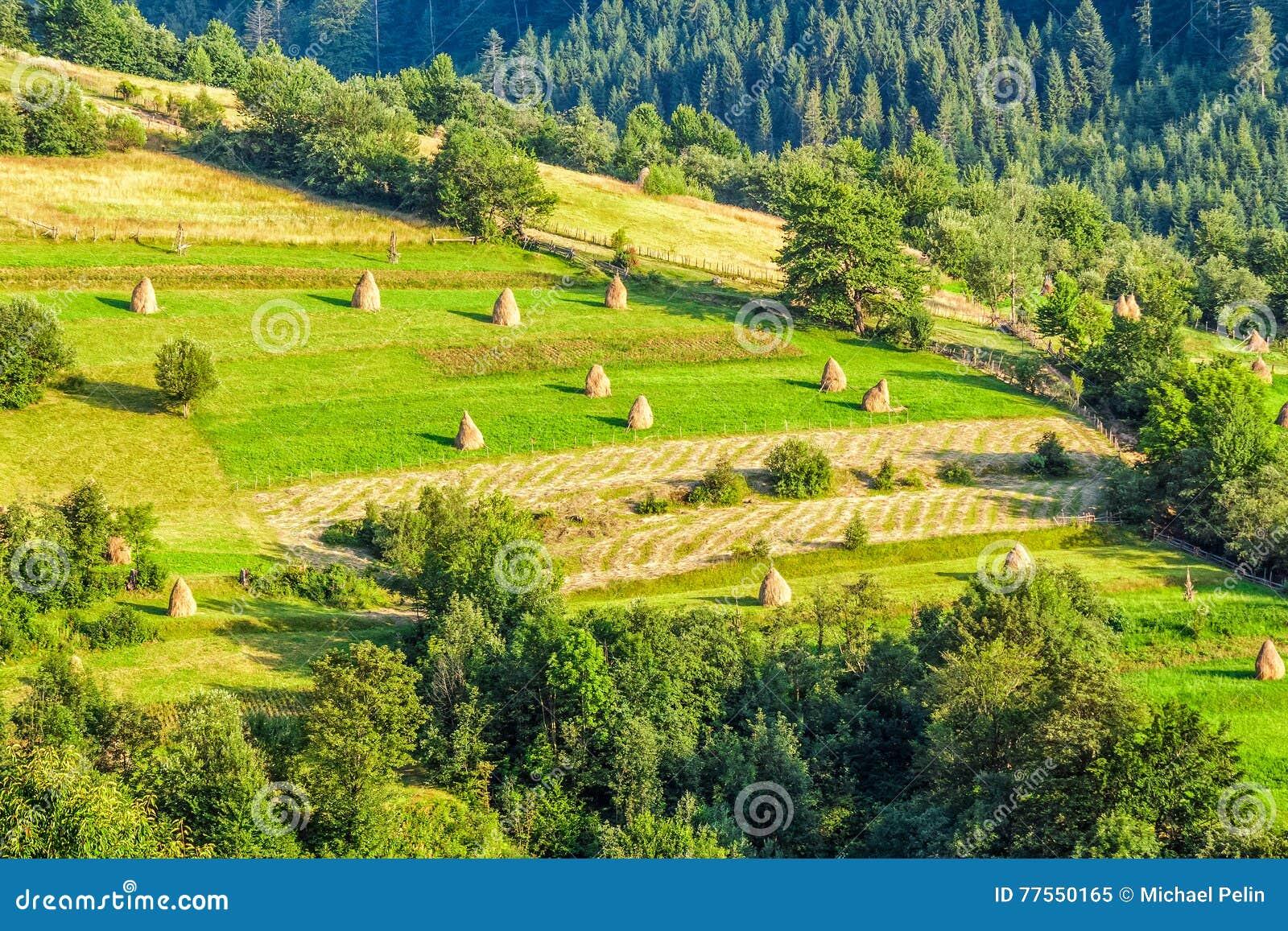 Champ rural sur le flanc de coteau