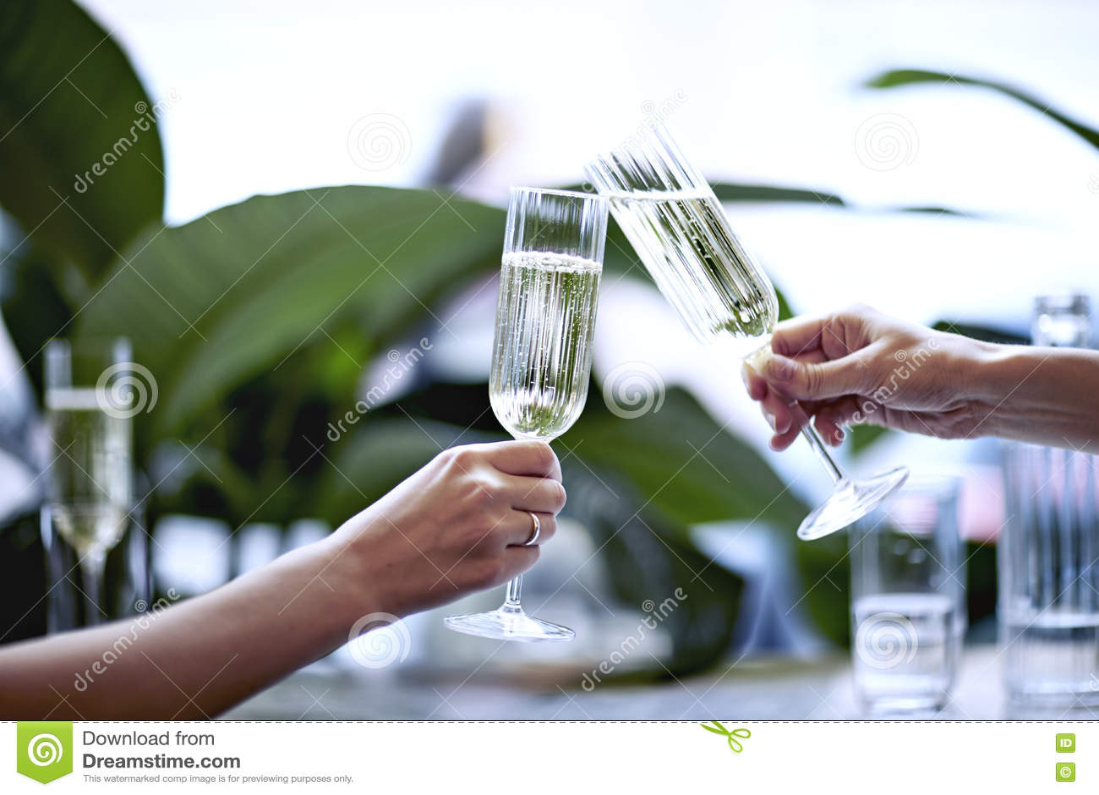Champagne i härligt exponeringsglas Möte i en stadsrestaurang eller kafé Houseplants near fönstret, dagsljus