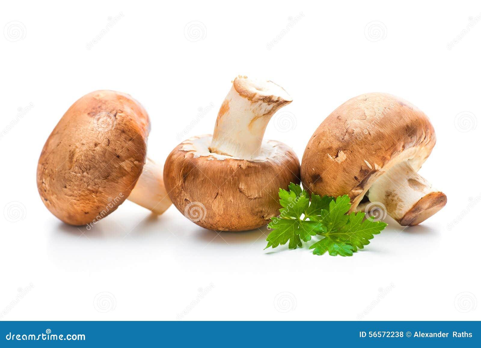 Download Champignon φρέσκα μανιτάρια Στοκ Εικόνες - εικόνα από διατροφή, μανιτάρια: 56572238