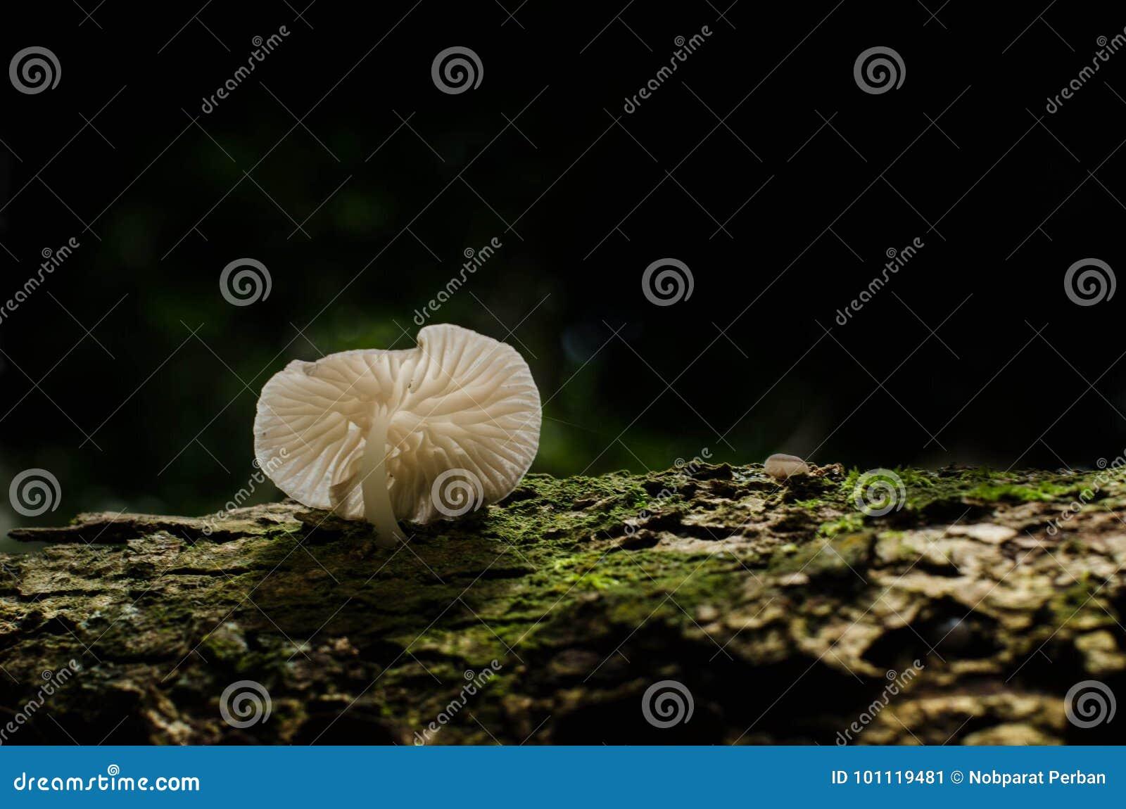 Champignon, Basidiocarp, champignons de la Zélande
