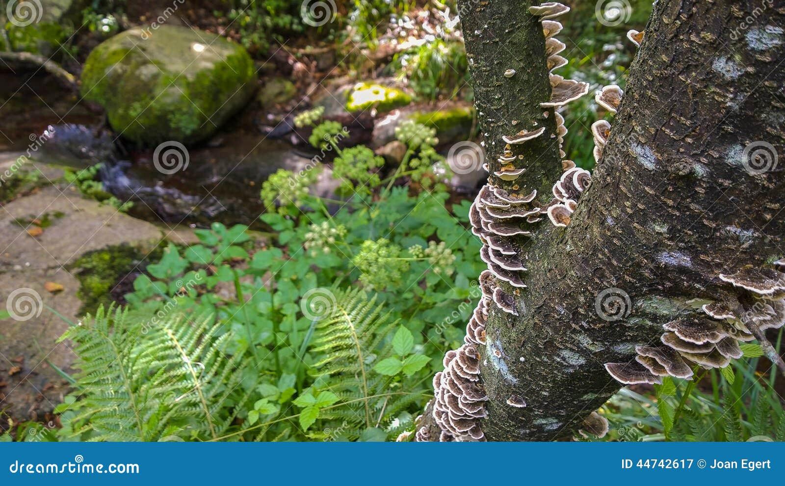 Champignon de parenth se de l 39 artiste s 39 levant sur le - Champignon sur tronc d arbre ...