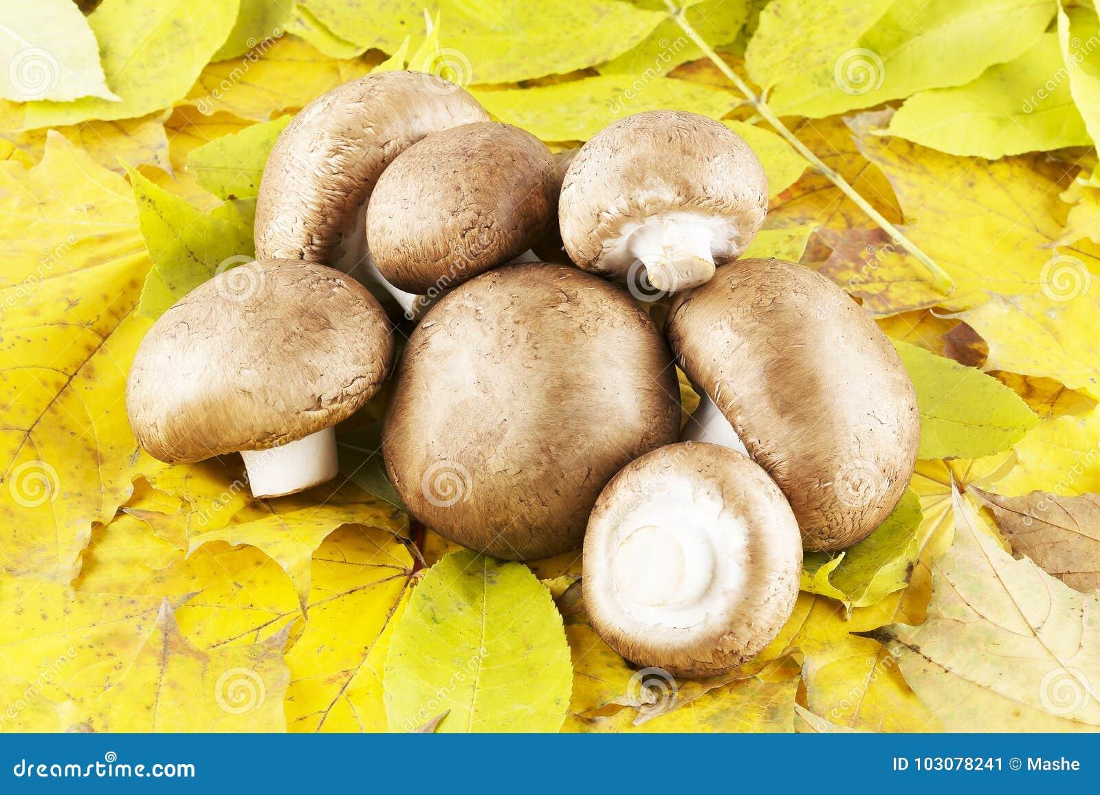 Champignon de champignon de paris en feuilles