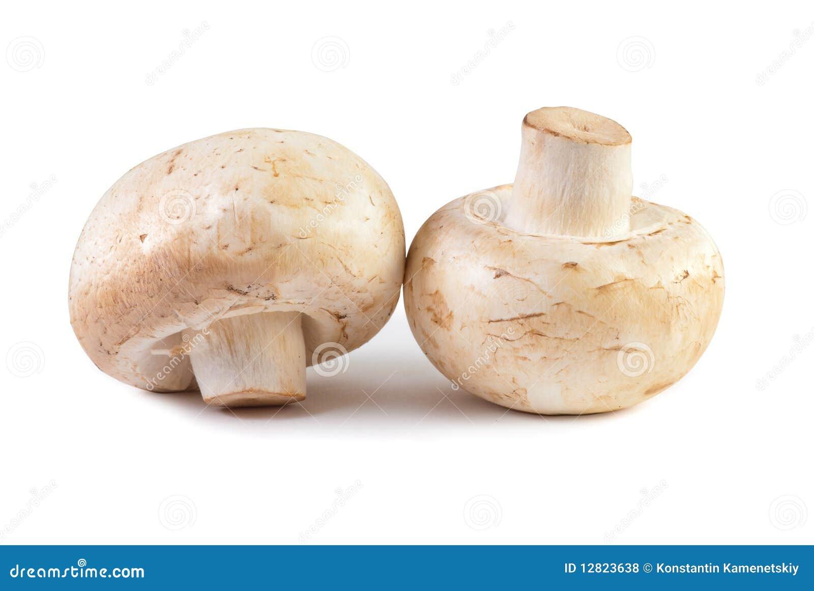 Champignon Mushroom Macro Isolated Stock Photo - Image of vegetable, macro: 12823638