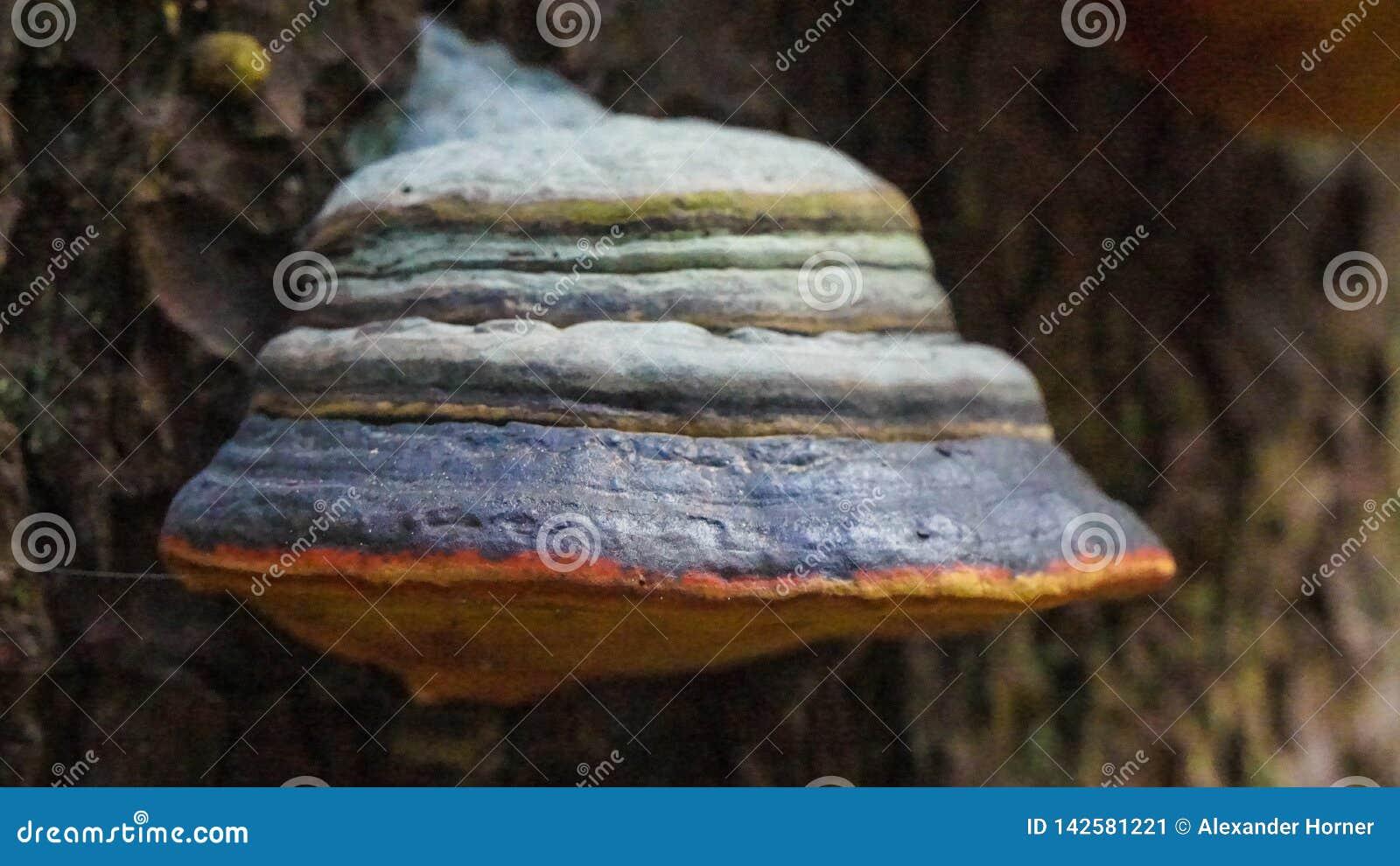 Champignon simple s élevant sur l arbre