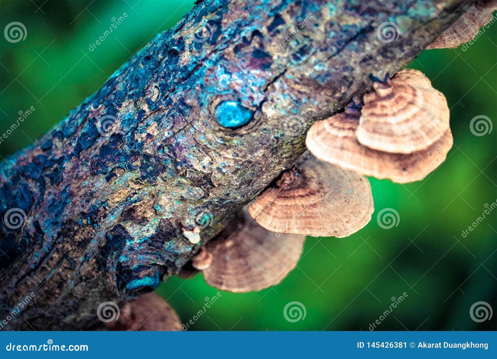 Champignon sur le bois de construction