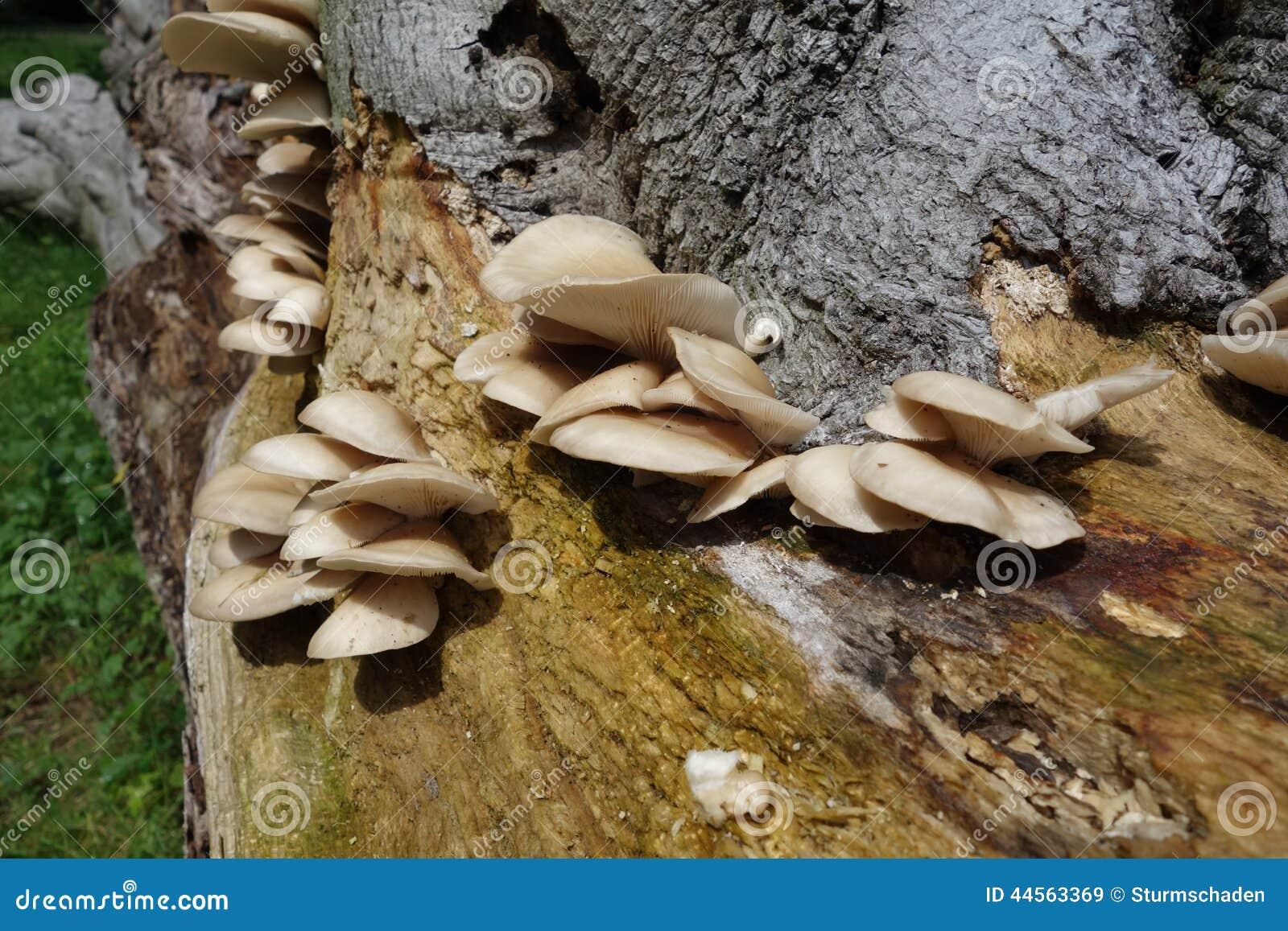 Champignons dans la for t sur un tronc d arbre - Champignon sur tronc d arbre ...