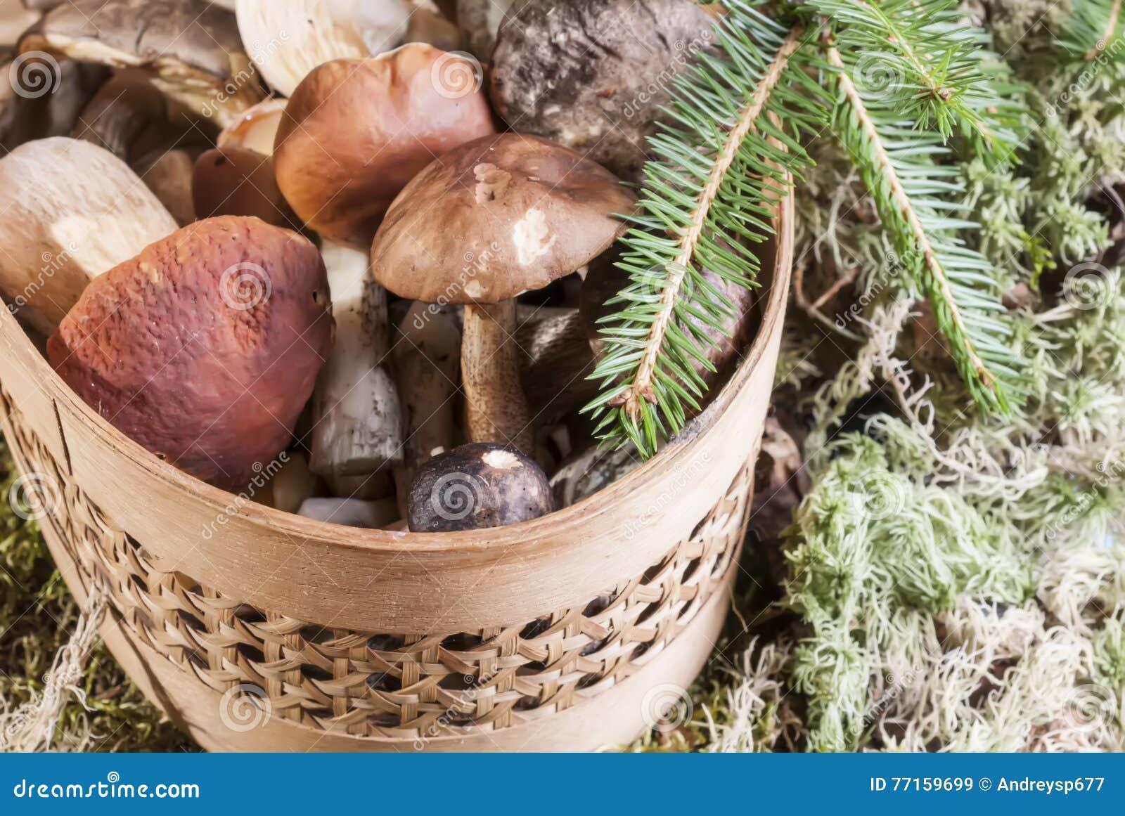 Champignons dans le panier se tenant sur la mousse dans la forêt