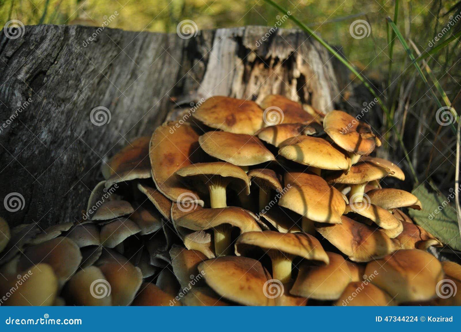 Champignons Dans Le Répandage De Forêt Automne Champignons