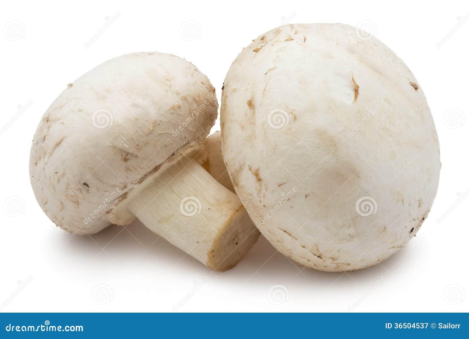 Champignons de champignon de paris