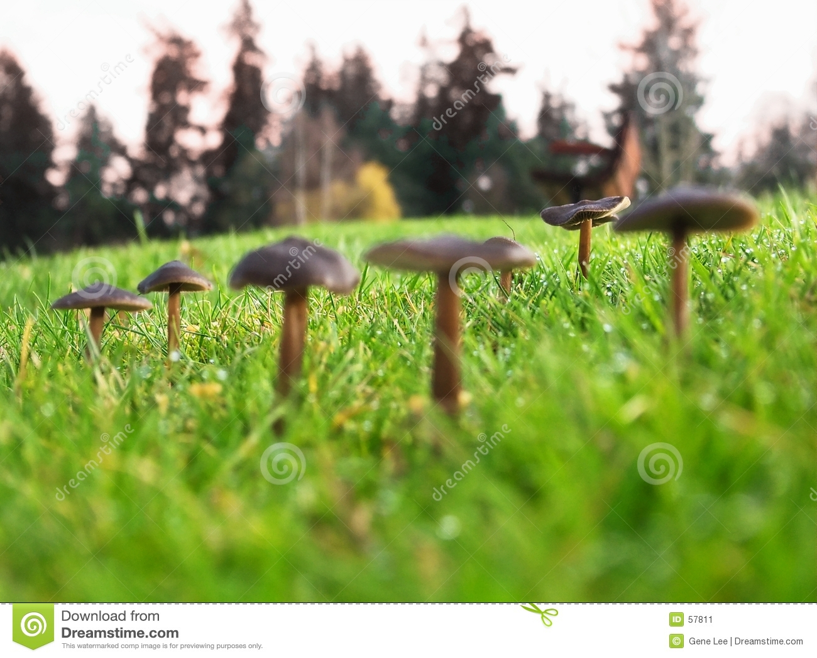 Download Champignons De Couche, DOF Peu Profond Image stock - Image du nature, centrale: 57811