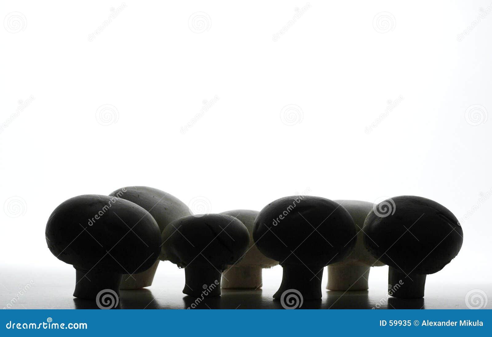 Champignons de couche foncés