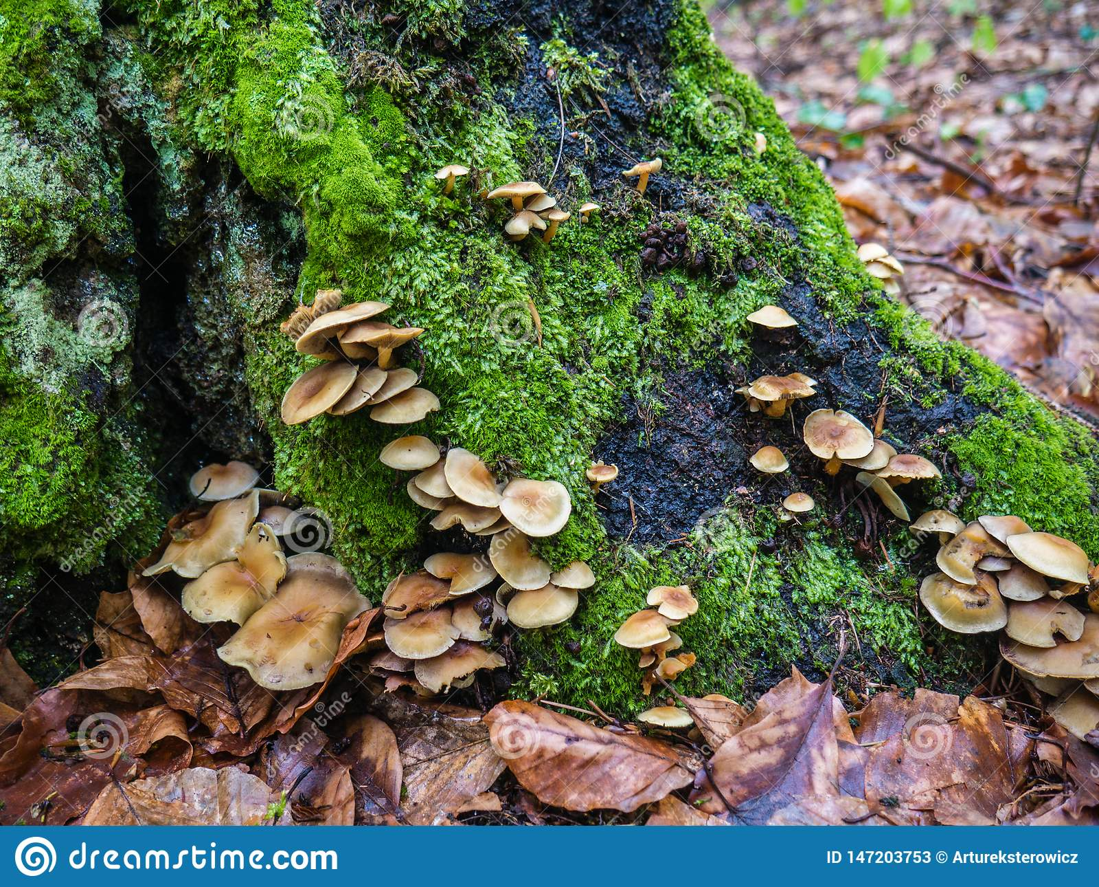 Champignons de forêt sur le tronc d un arbre