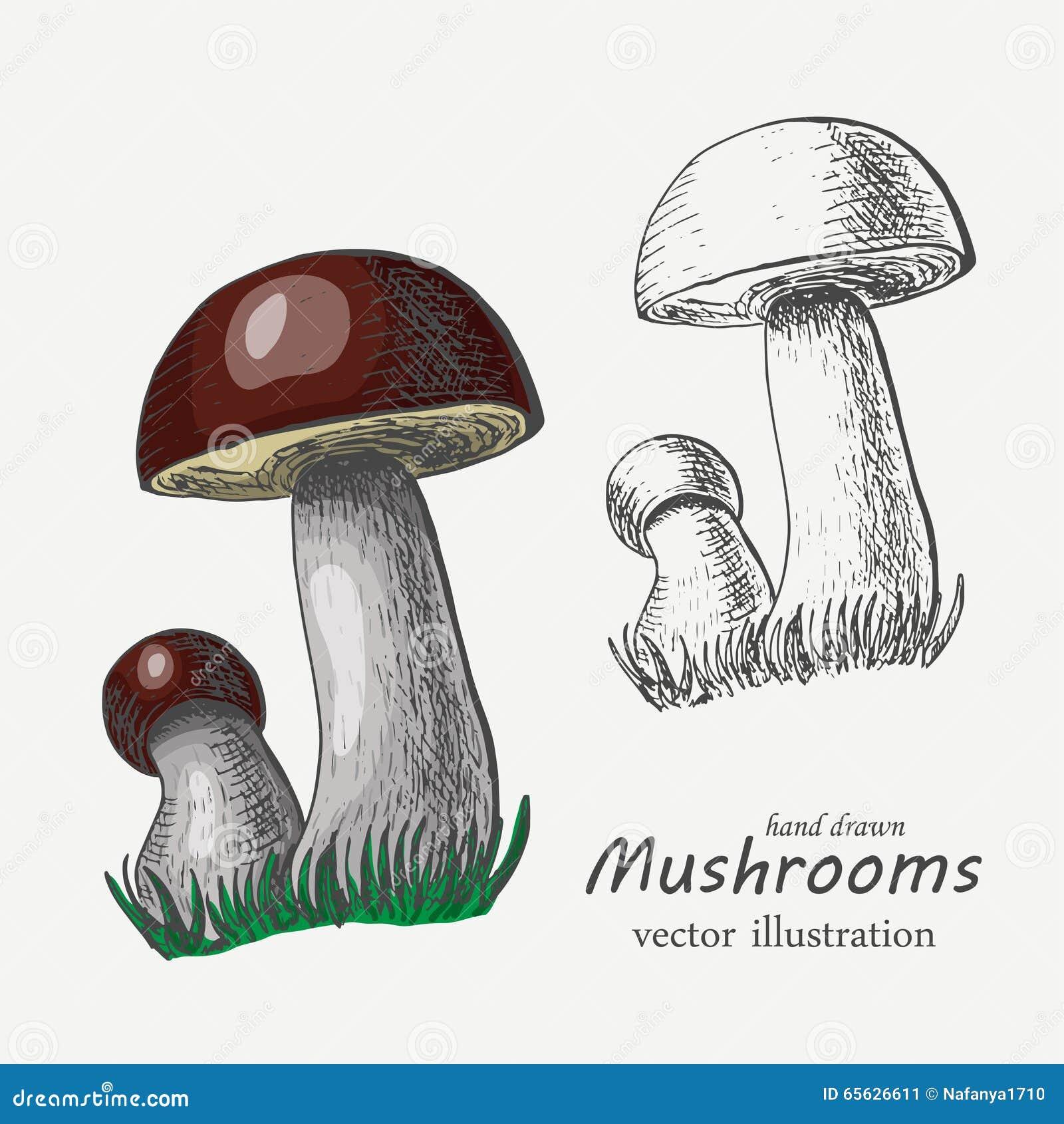 Champignons graphiques et colorés Illustration de vecteur