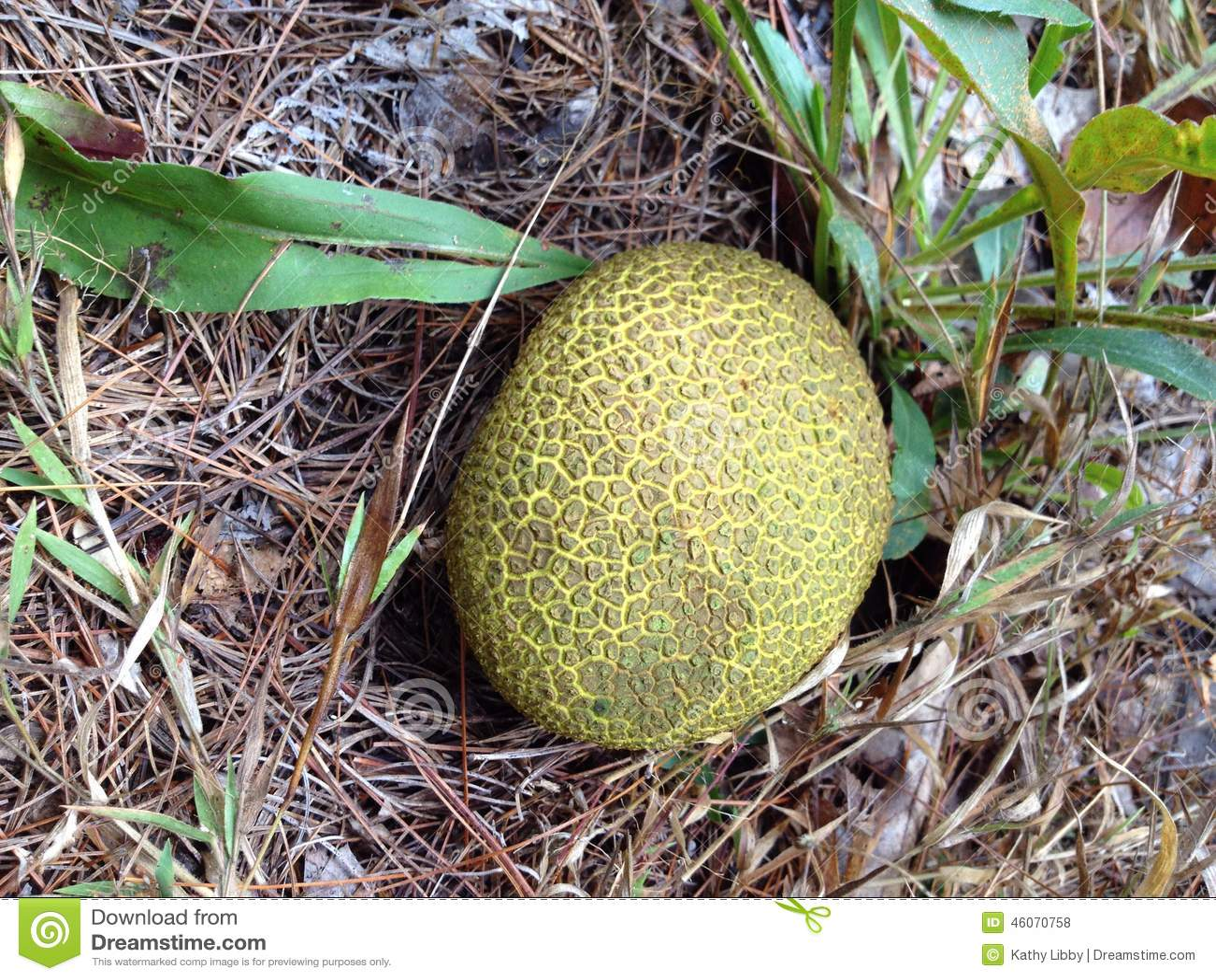 Champignons Jaunes Ronds Photo Stock Image Du Rond Automne
