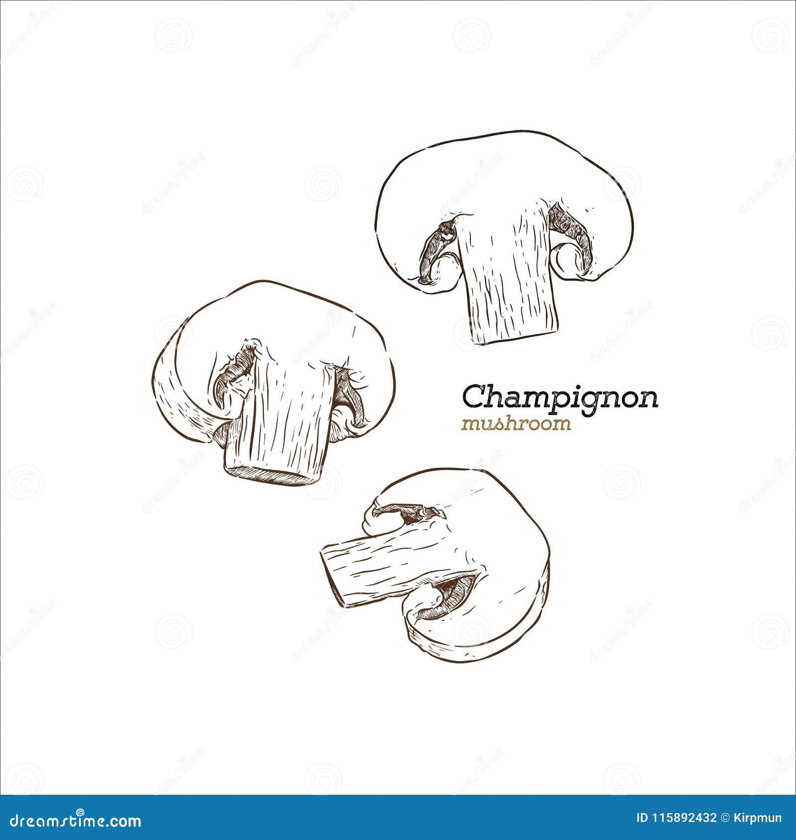 Champion Mushroom, Hand Draw Sketch Vector. Stock Vector ...