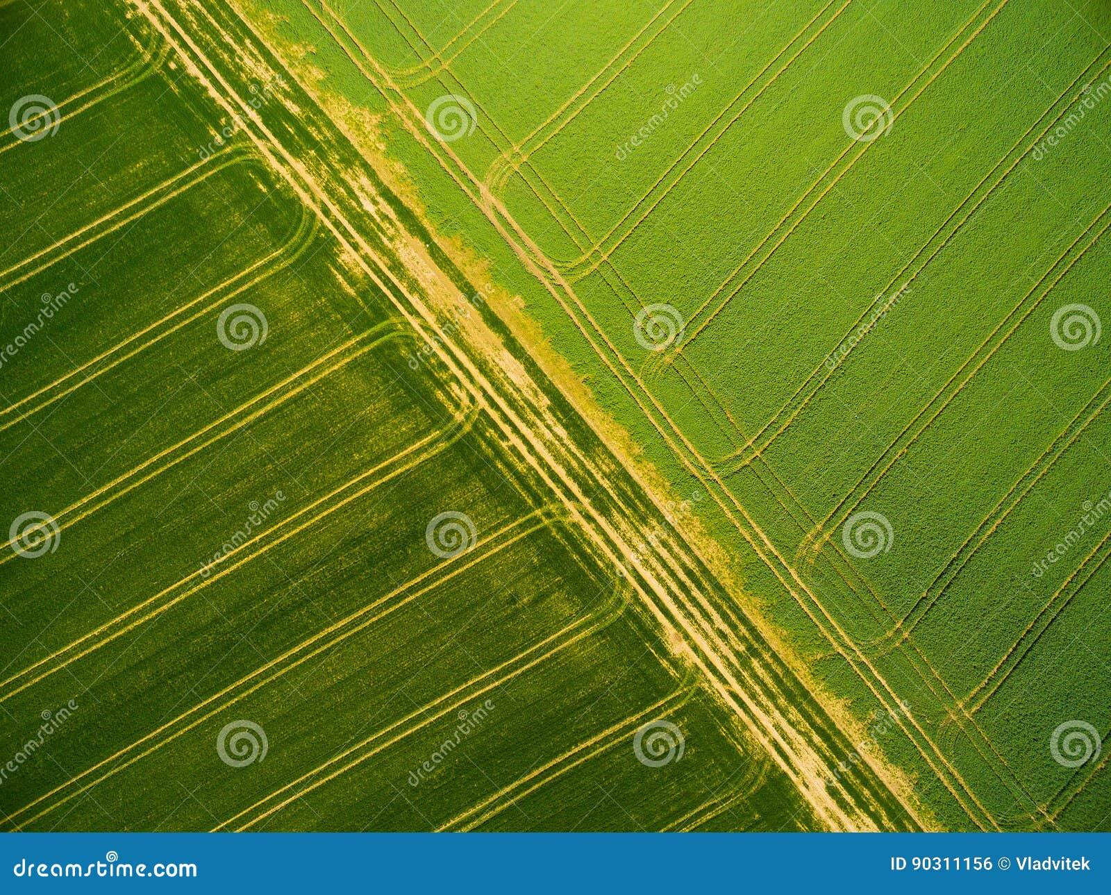 Champs de blé et de graine de colza avec des voies de tracteur