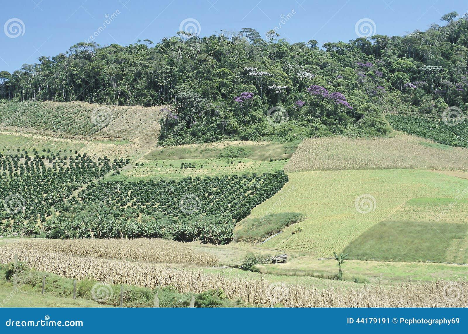 Champs et déboisement cultivés au Brésil du sud