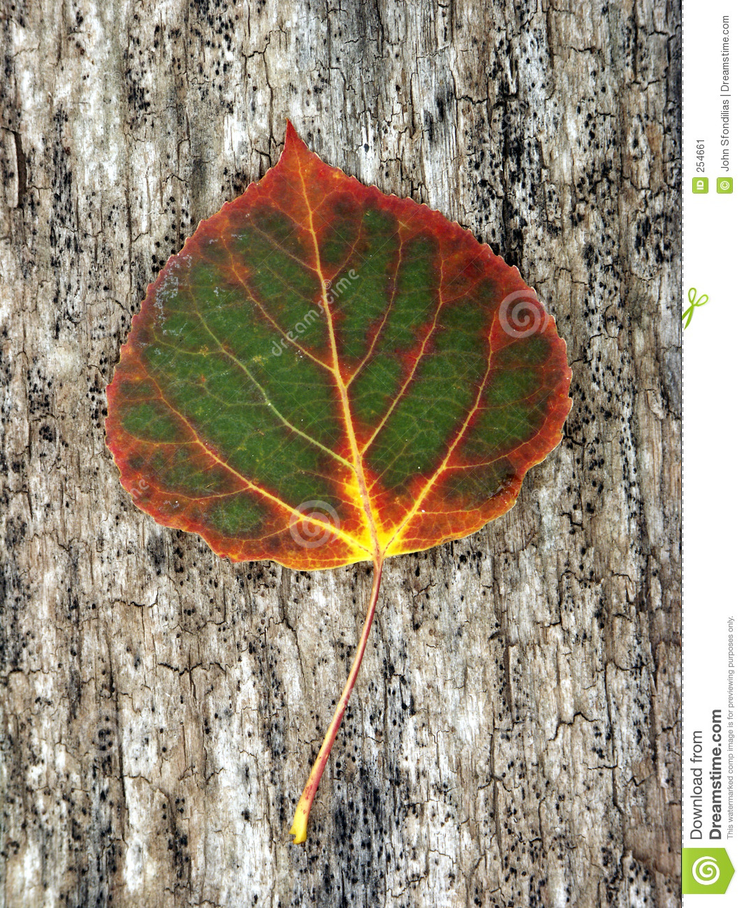 Download Changing Color stock image. Image of lime, autumn, creek - 254661