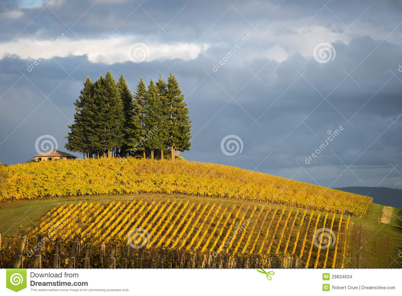 Autumn vineyards, Willamette Valley, Oregon