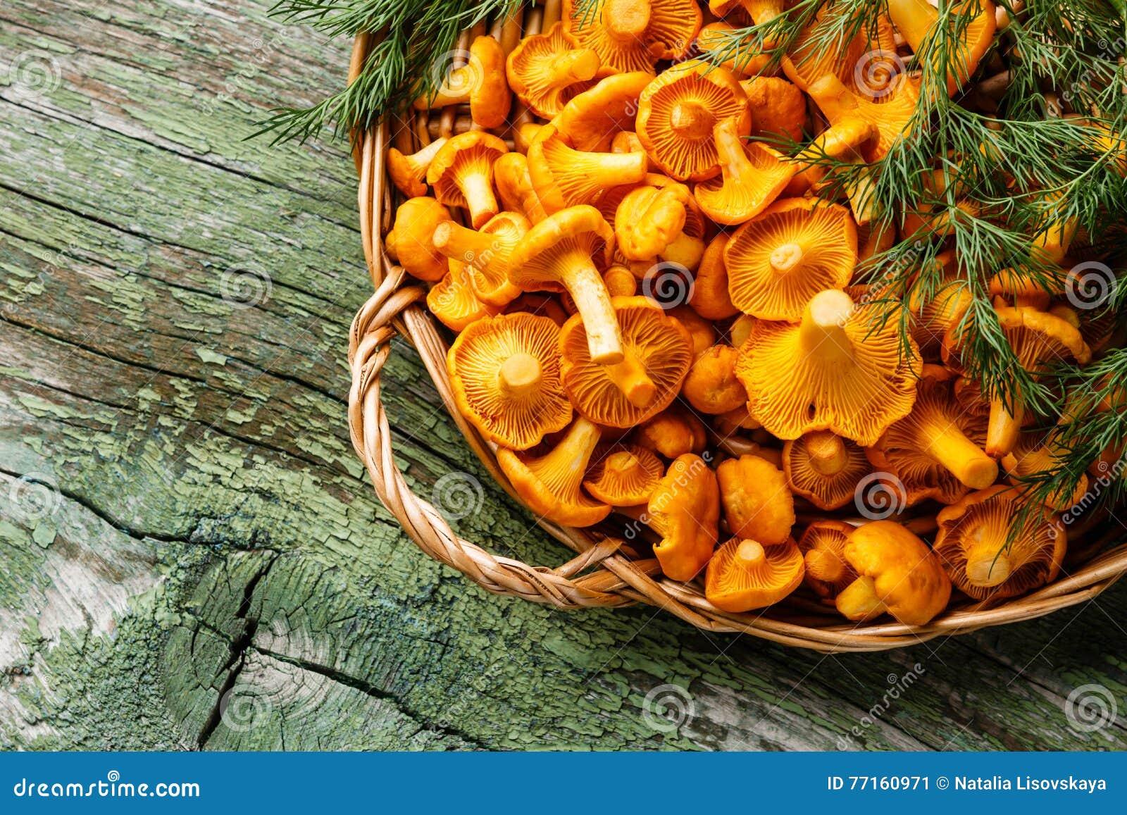 Chanterelles sauvages crues de champignons dans le panier