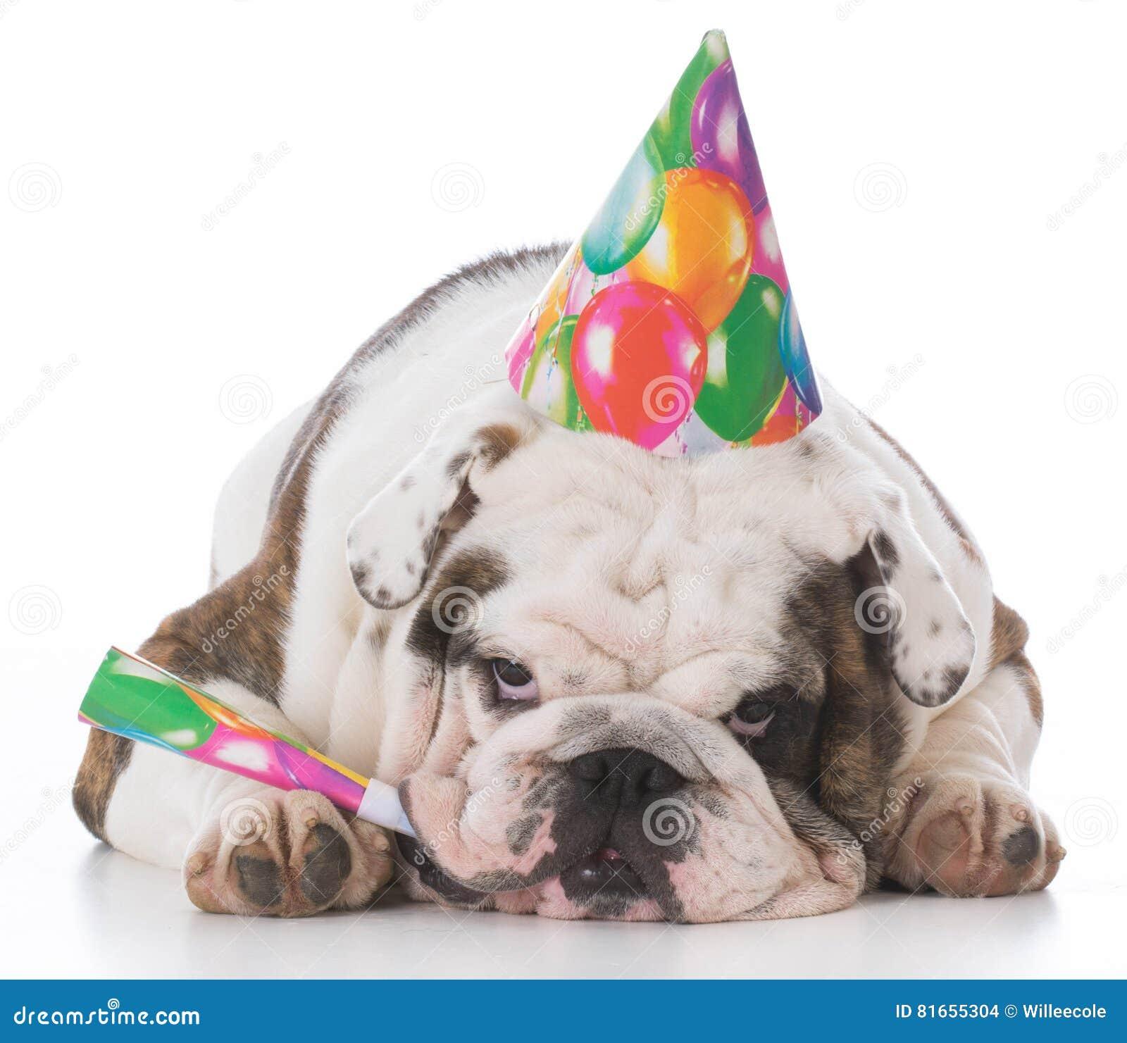 Chapéu desgastando do aniversário do cão