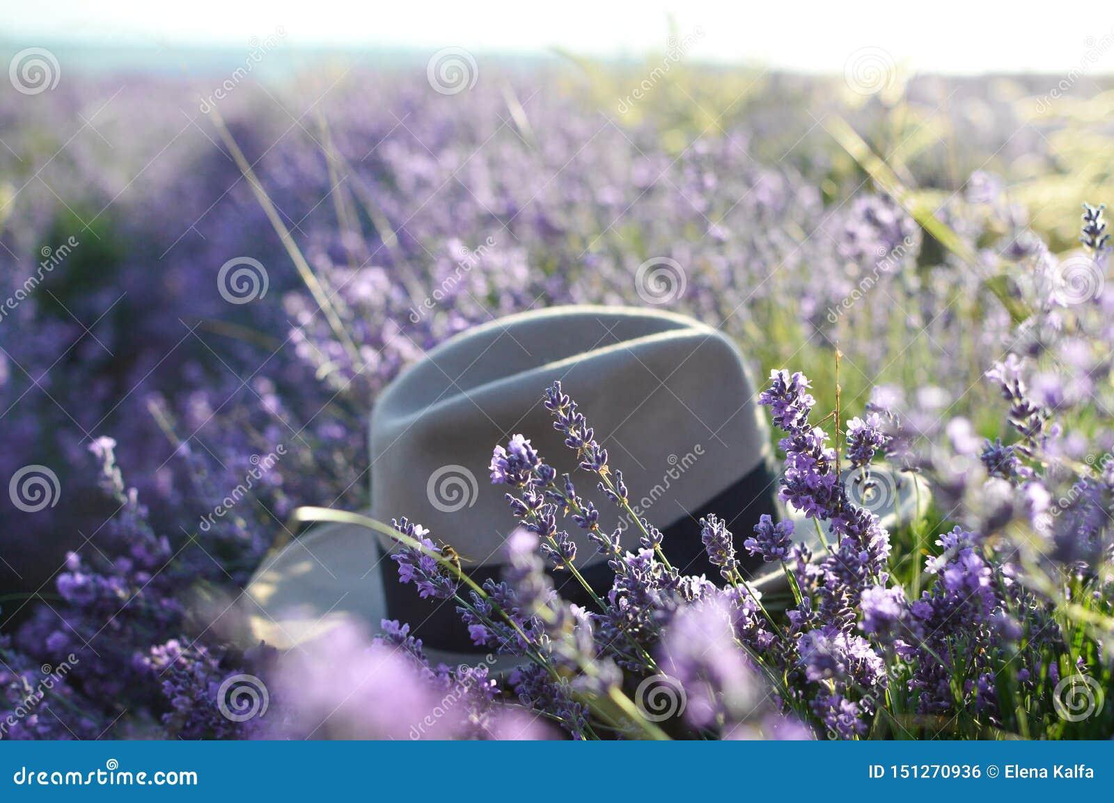 Chapeau dans un domaine de lavande, foyer sélectif Lever de soleil dans un domaine de lavande Concept de voyage, loisirs, beauté