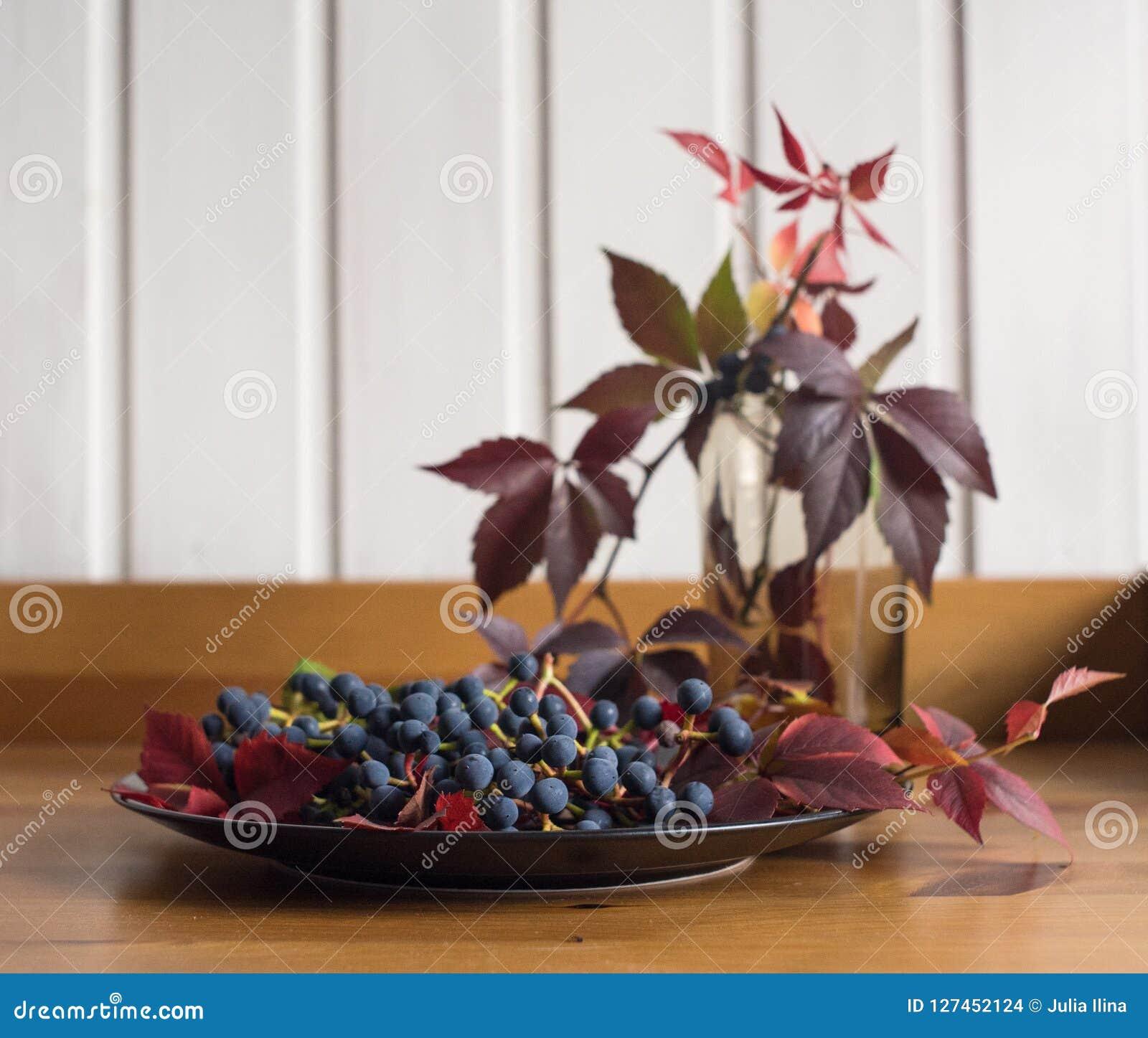 Chapeie a vida azul das bagas das folhas vermelhas das uvas ainda