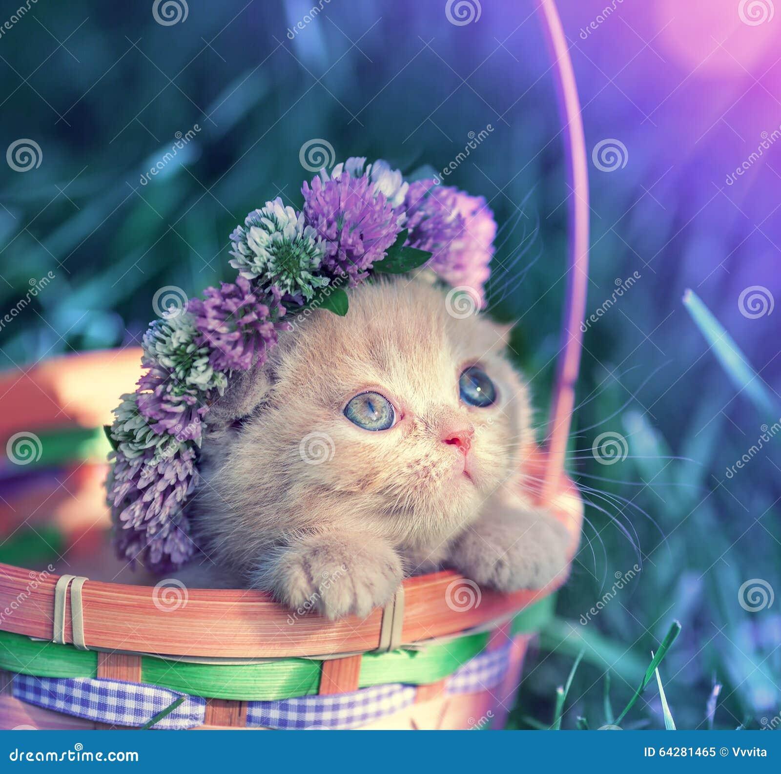 Chaplet coroado gatinho do trevo